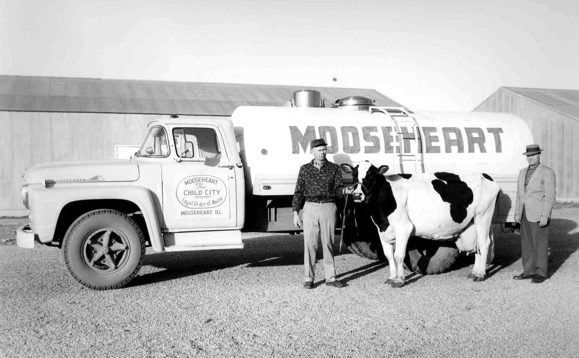"Dairy cow and truck, 1950s: For decades, Moose literature would boast that the Mooseheart Dairy made sure ""every child on campus gets a quart of whole milk to drink daily."" Under the direction and guidance of Dairy Manager Del Klussendorf, right, Mooseheart's Holstein breeding and dairy-production operation was developed into one of the most acclaimed in America, winning numerous national awards through the 1940s, 50s and 60s."