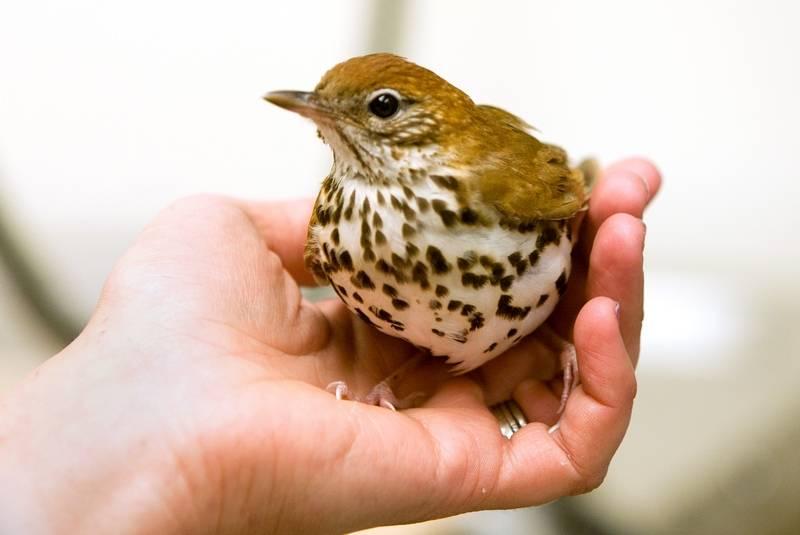 Explore  Birds of North America Online