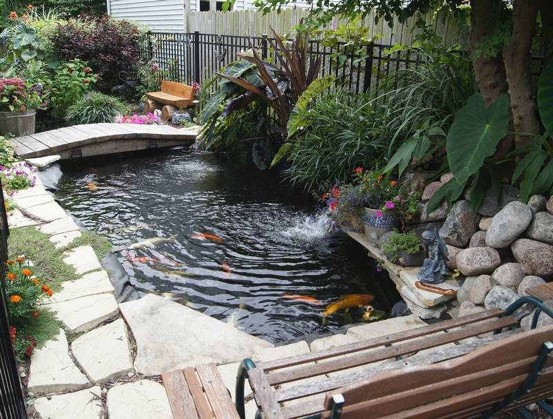 Lisle couple promotes keeping koi as pets for Keeping koi in a pond