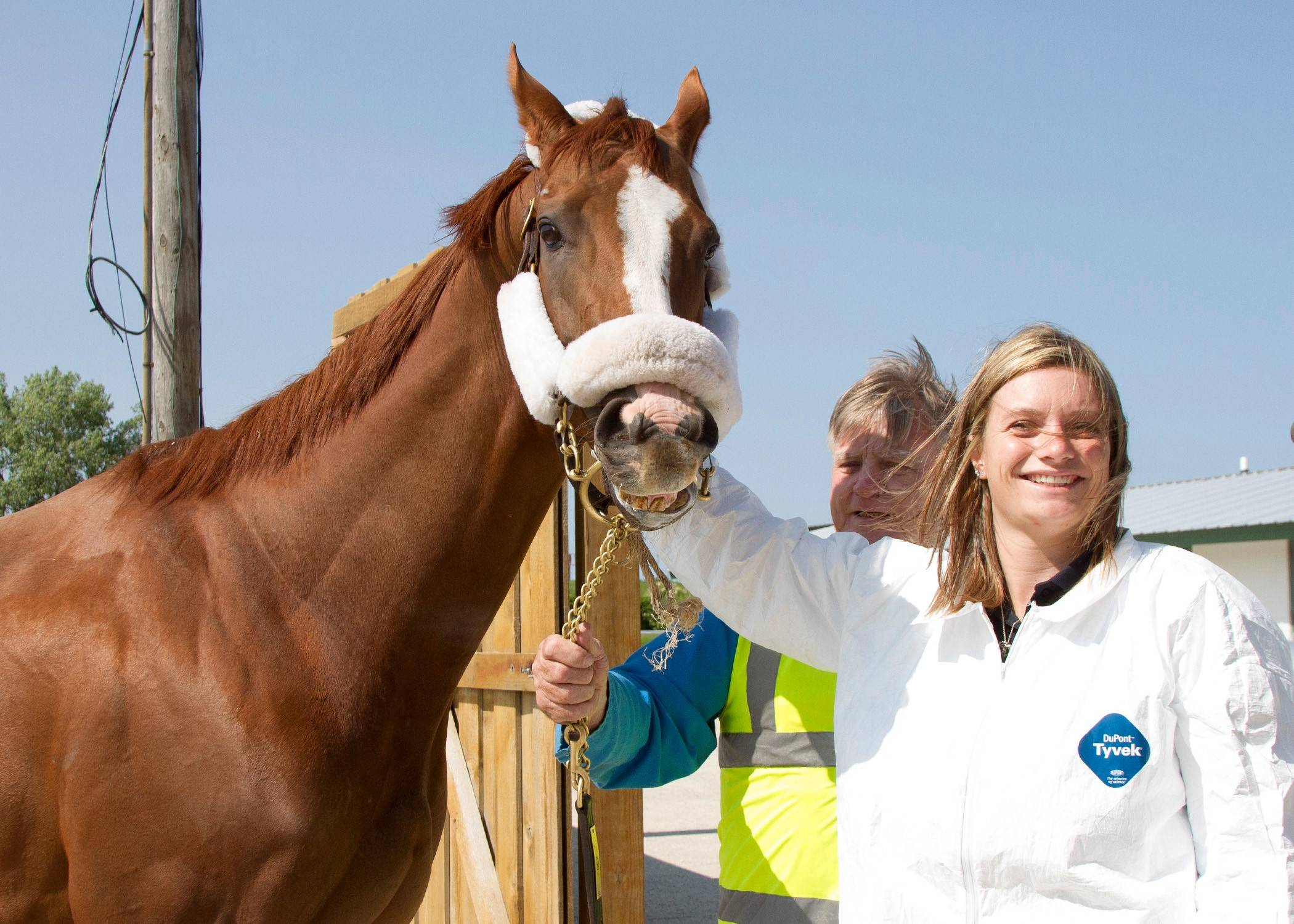 California Chrome arrives at Arlington Park on Tuesday. The 2014 Kentucky Derby and Preakness winner and horse of the year will train at the racetrack ahead of the Arlington Million on Aug. 15. He's pictured here with Anna Wells, his exercise rider.
