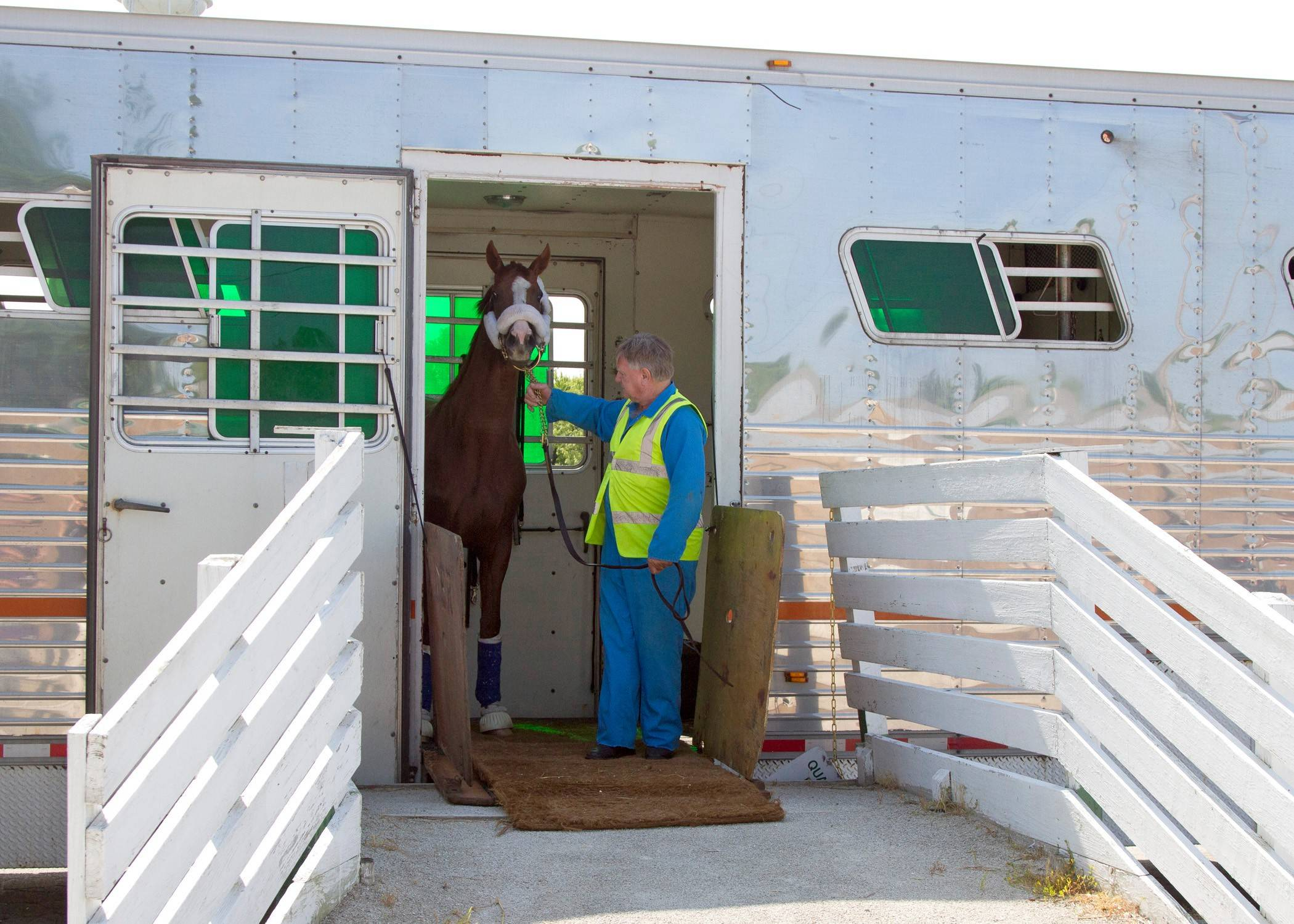 California Chrome arrives at Arlington Park on Tuesday. The 2014 Kentucky Derby and Preakness winner and horse of the year will train at the racetrack ahead of the Arlington Million on Aug. 15.
