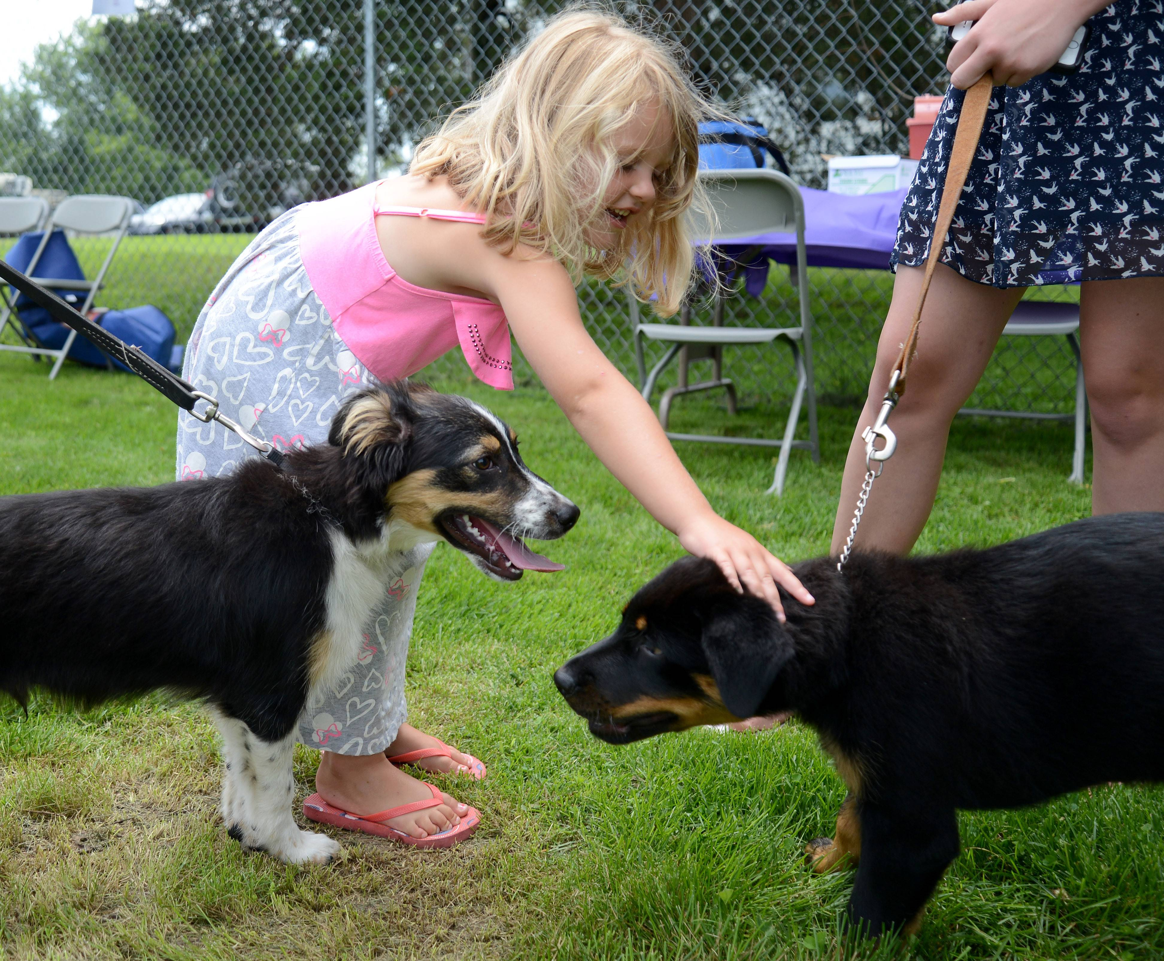 Brooklin Scheleski, 4, of Huntley and her puppy Brewster, left, meet Porscha the puppy owned by Julie Hirsch of Pingree Grove while they wait in line to be microchipped at PAWFest at Animal House Shelter in Huntley Saturday. Microchipping, vaccinations and distemper shots were offered at discounted prices.