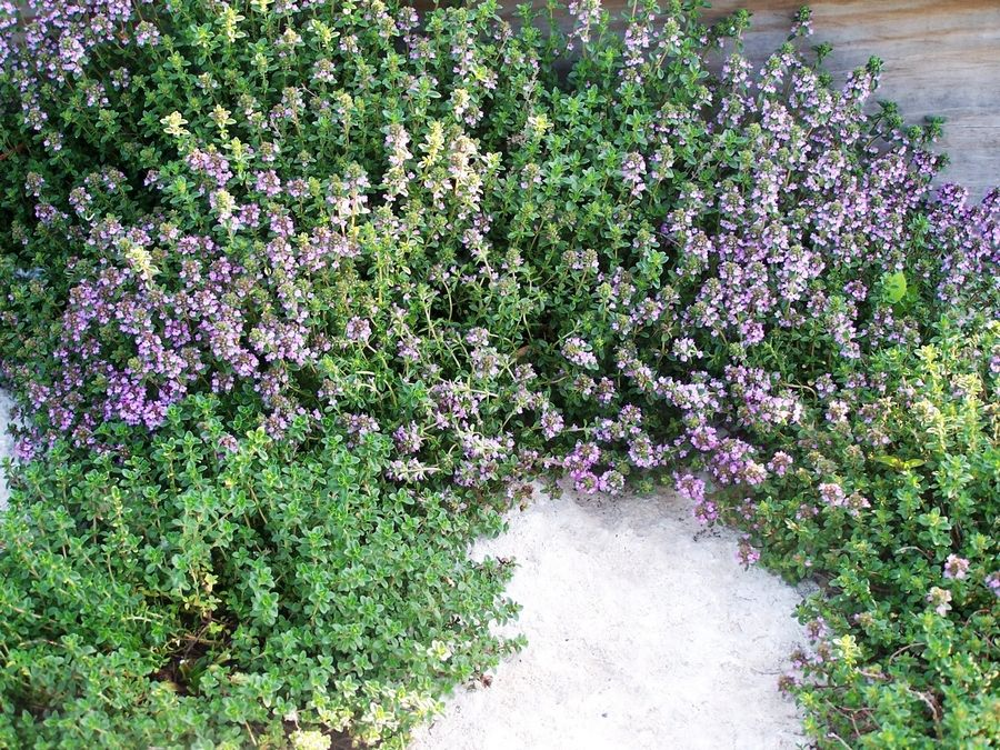 Plant thyme around flagstones and release its scent when its stepped on.