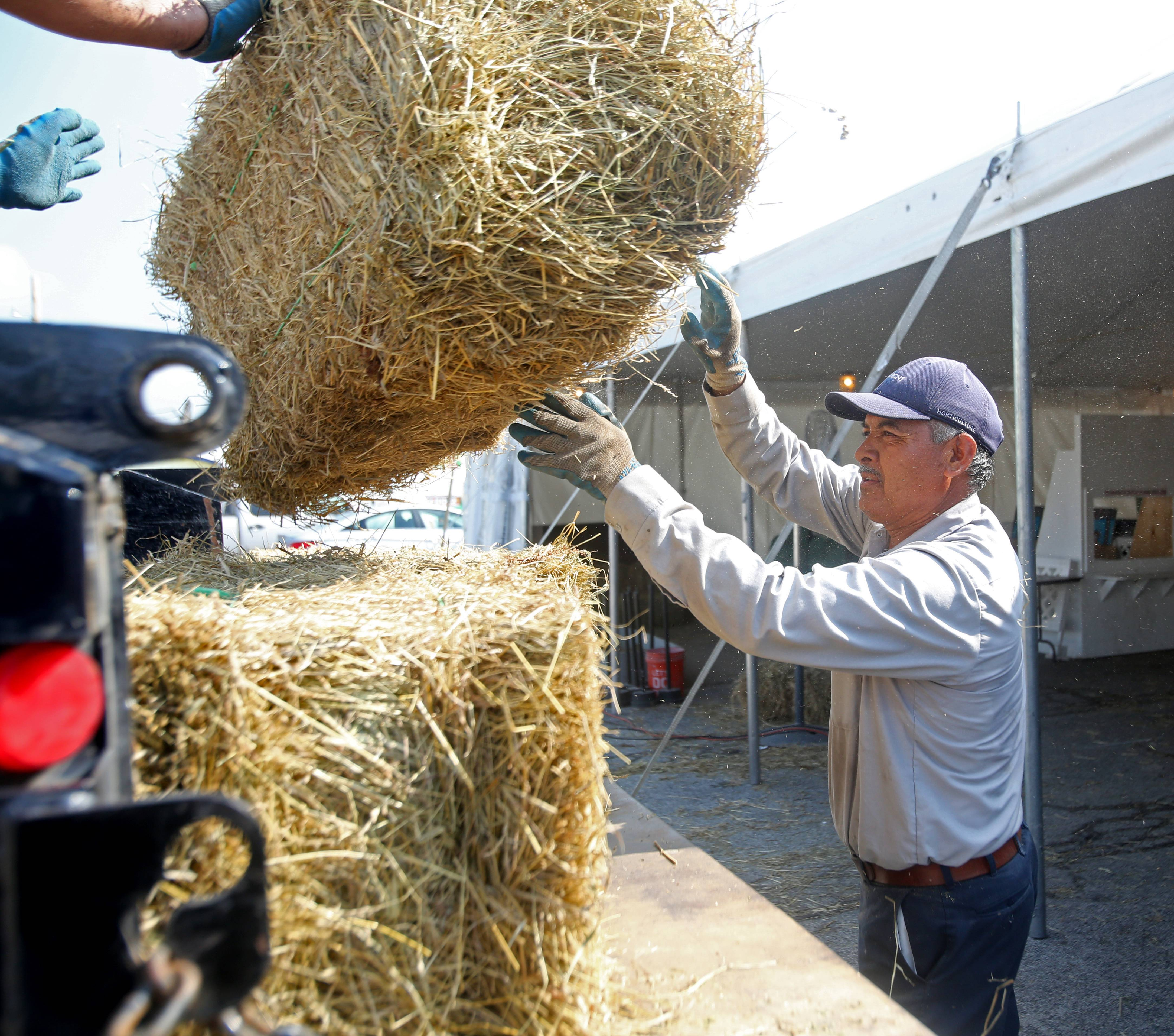 Alberto Banullo of Cantigny loads bails of hay from under a show tent Monday as cleanup continues following the DuPage County Fair, which ended Sunday.