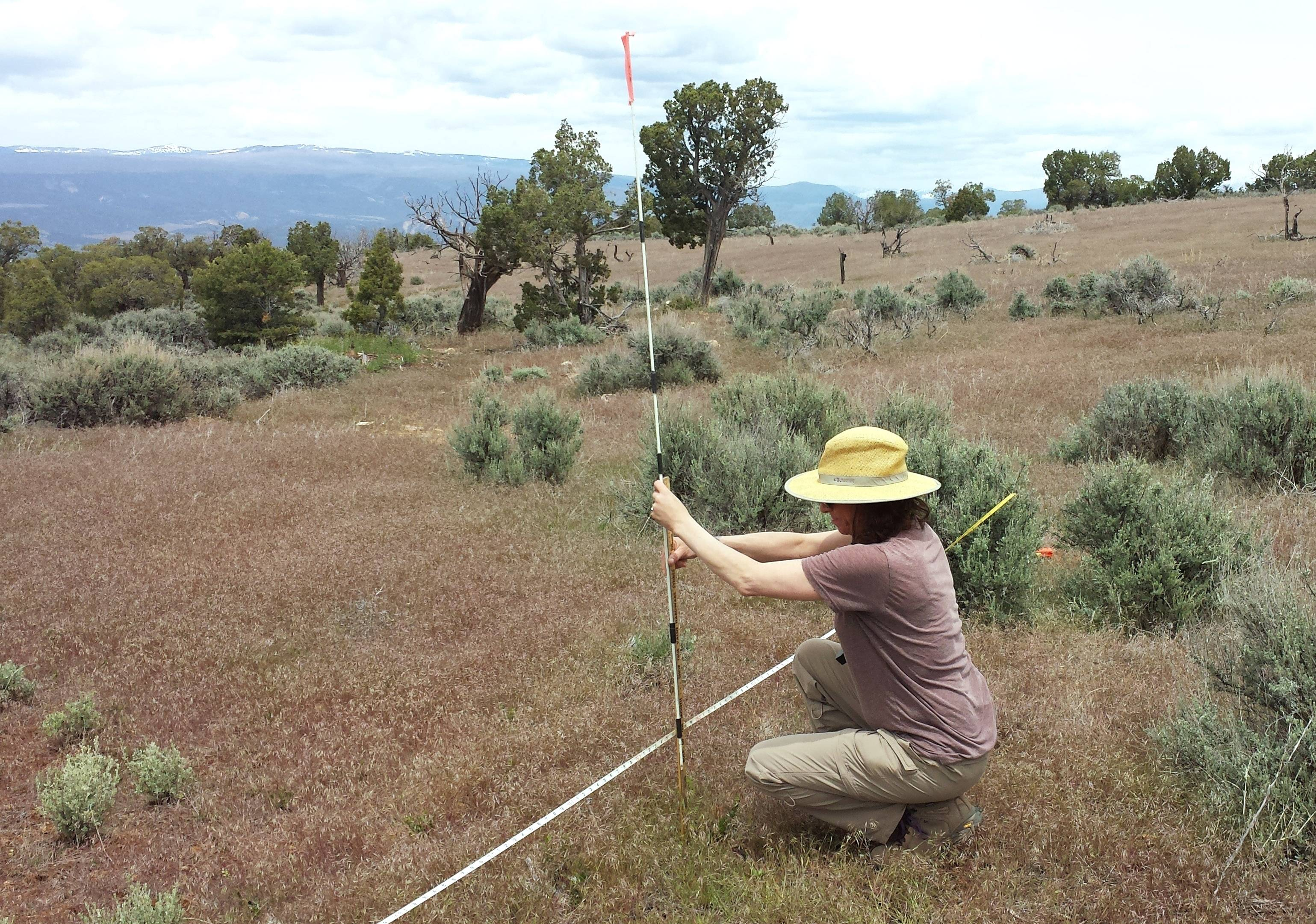 Elizabeth Kaufman of Wauconda working with the Bureau of Land Management in Montrose, Colorado, in conjunction with the Chicago Botanic Garden's Conservation and Land Management program.
