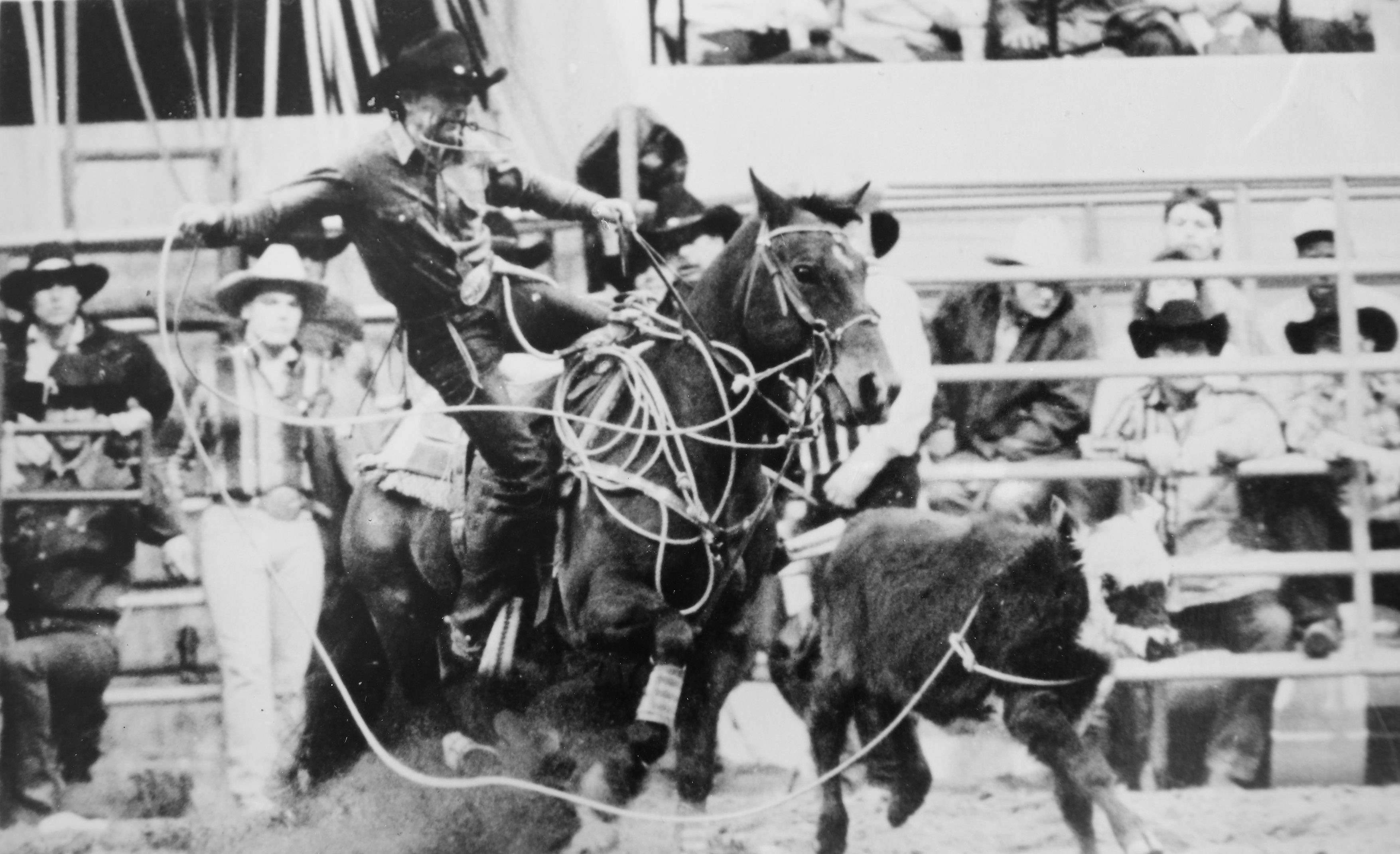 A cowboy ropes a calf in the rodeo at the Lake County Fair in Grayslake on Route 45 and Route 120 in the 1980s.