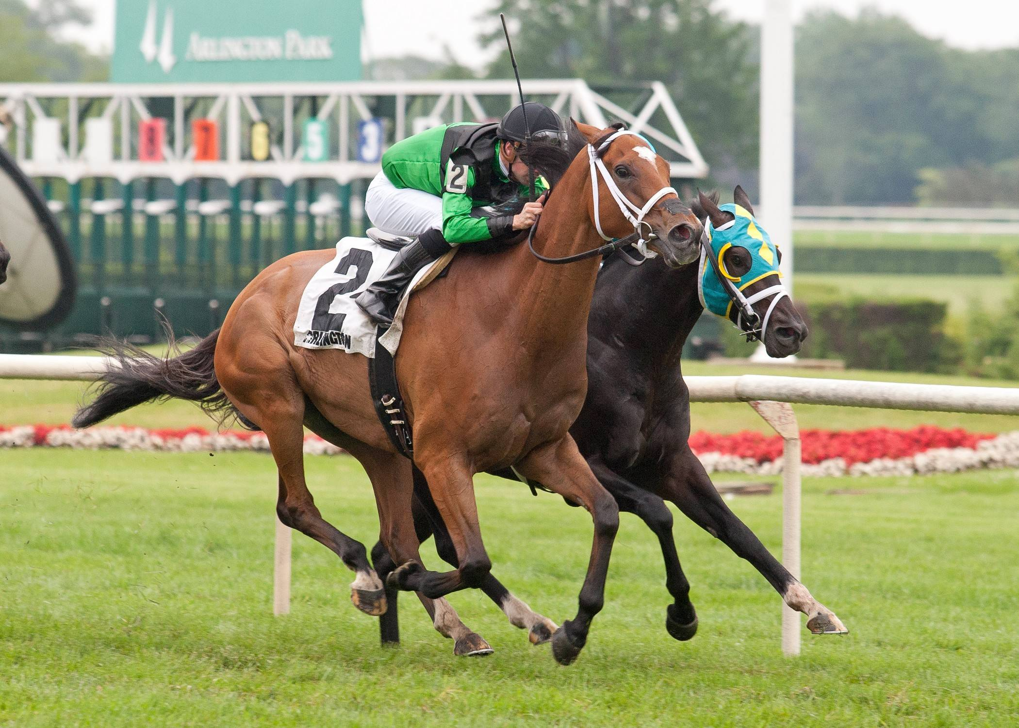 The Pizza Man won The Grade III Stars and Stripes on July 11 at Arlington as the 4-5 favorite under Florent Geroux.