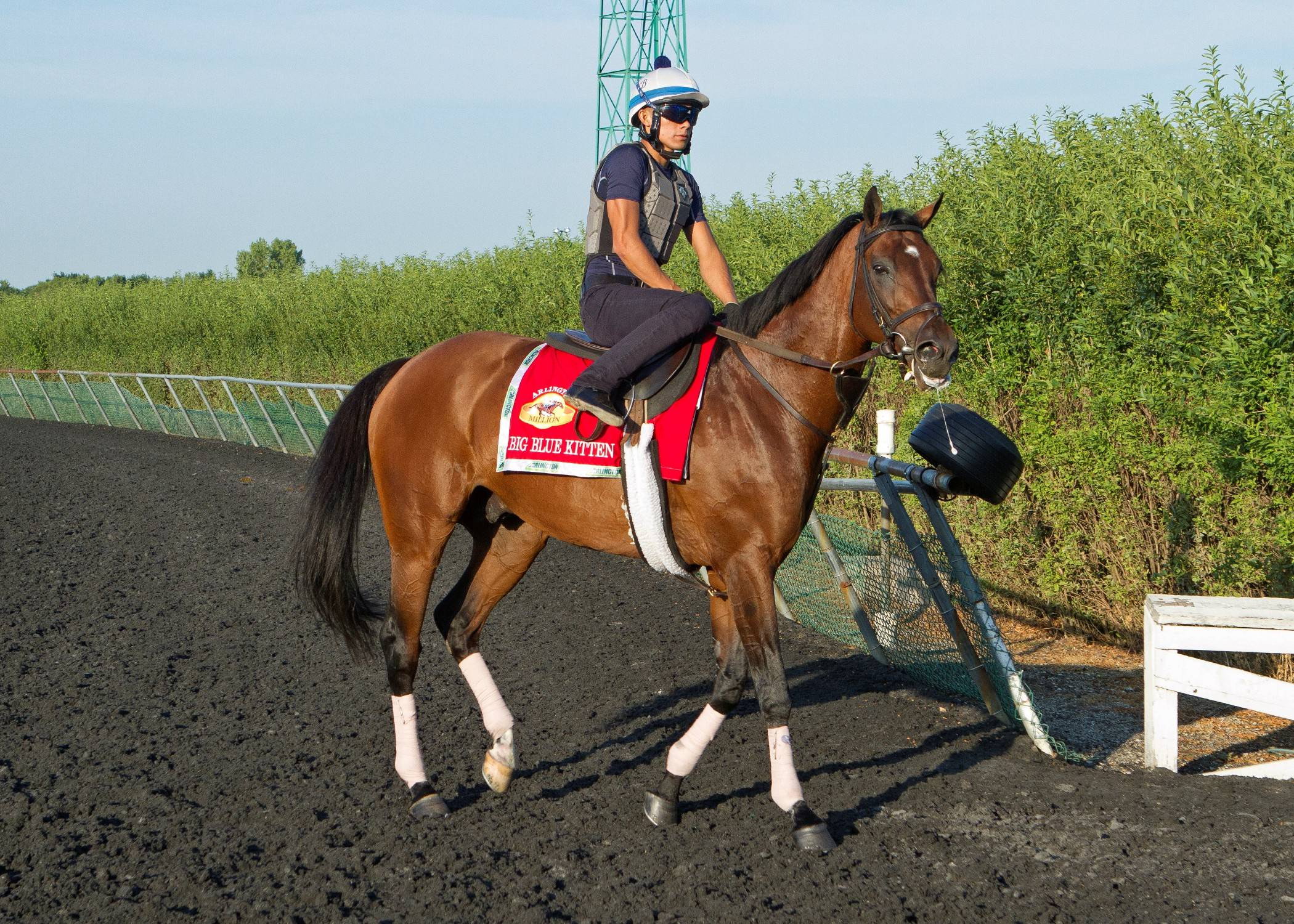 Big Blue Kitten gets in a morning workout this week for Saturday's running of Arlington Million.
