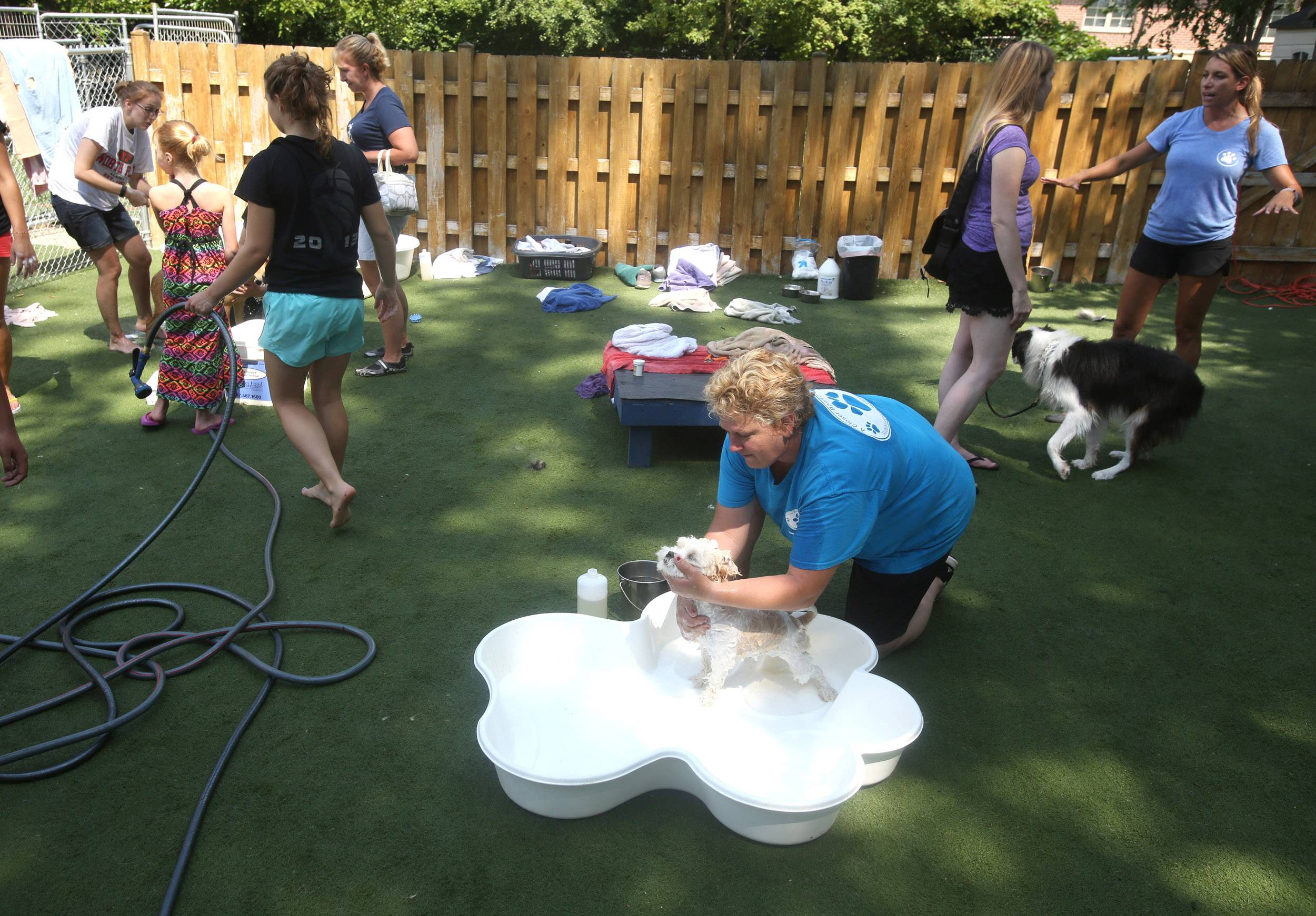 Katy Cushing, center, bathes a dog during a Charity Dog Wash and Adoption Event held Saturday at Closer Bond Dog Training in Palatine.