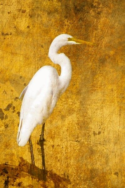 Roselle photographer Joanne Barsanti is a former customer-turned-professional who will showcase her pictures at the festival. She snapped this image of a egret at the Meacham Grove Forest Preserve in Bloomingdale.