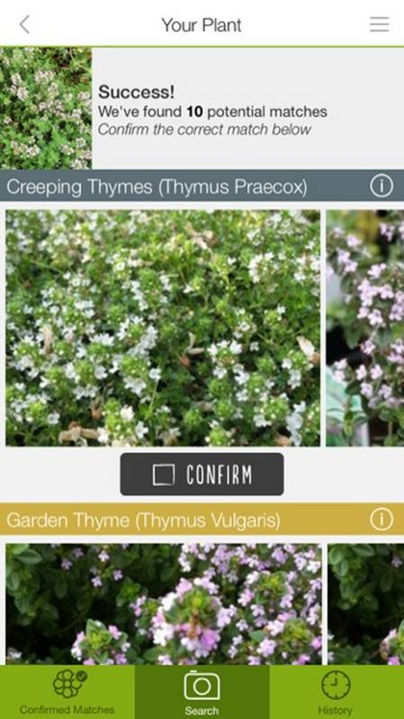Identifying Plants There 39 S An App For That. App To Identify Plants And Flowers   The Best Flowers Ideas