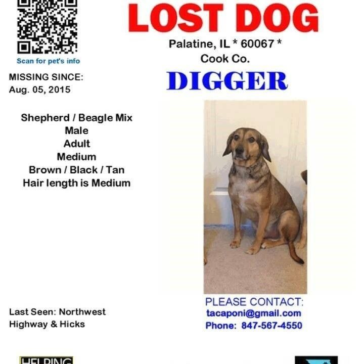 "This poster is on the ""Find Digger"" Facebook page set up to assist the Caponi family of Palatine in their search for their missing German shepherd-beagle mix."