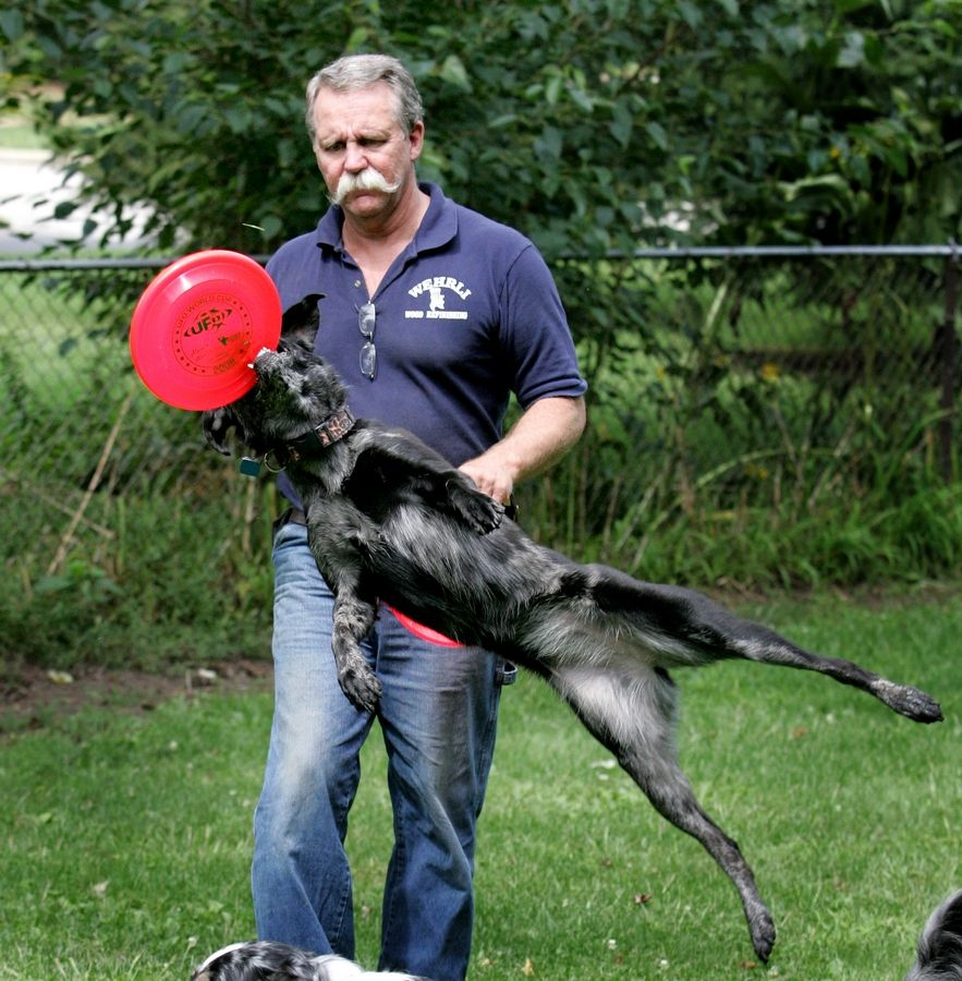 Tom Wehrli of Naperville is coordinating two disc-catching events for dogs and their handlers this weekend, the Ashley Whippet Invitational on Saturday and a UFO world cup series event on Sunday.