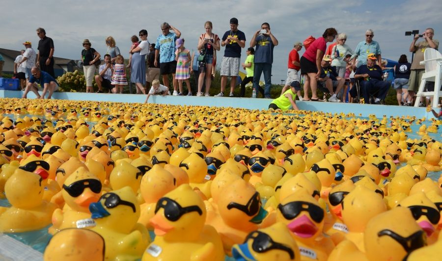 Five thousand rubber ducks float on the lazy river during the Fox Valley Hope Floats Duck Race at Otter Cove Aquatic Park in St. Charles Monday. The annual event benefits the St. Charles Rotary and Equine Dreams.