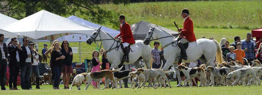 The Parade of Hounds opened the festivities at the 11th annual LeCompte/Kalaway Trailowners Cup in Barrington Hills on Saturday.