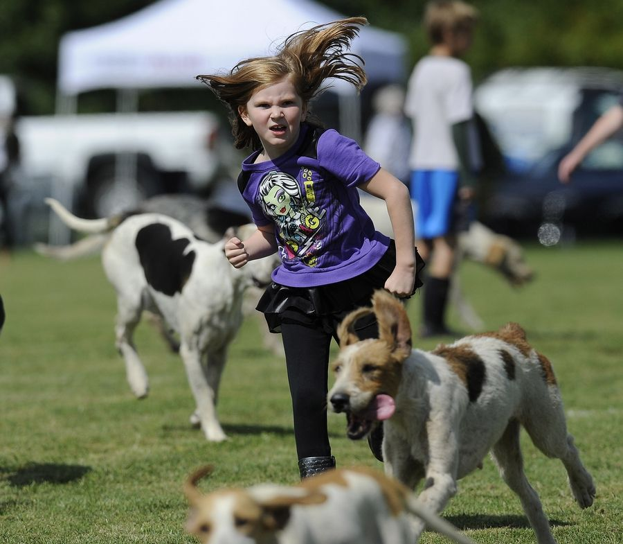 Jillian Roenneburg, 9, of Adams, Wisconsin, chases down the dogs during the Parade of Hounds at the LeCompte/Kalaway Trailowners Cup in Barrington Hills on Saturday.