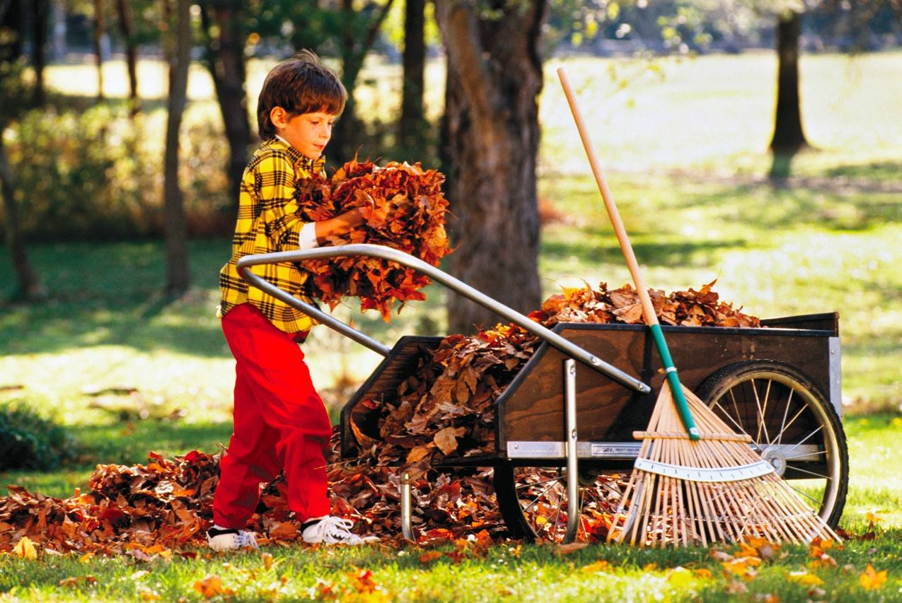 Leaves have long been favorite autumn playthings for children, who eagerly await jumping into large piles of fallen leaves.