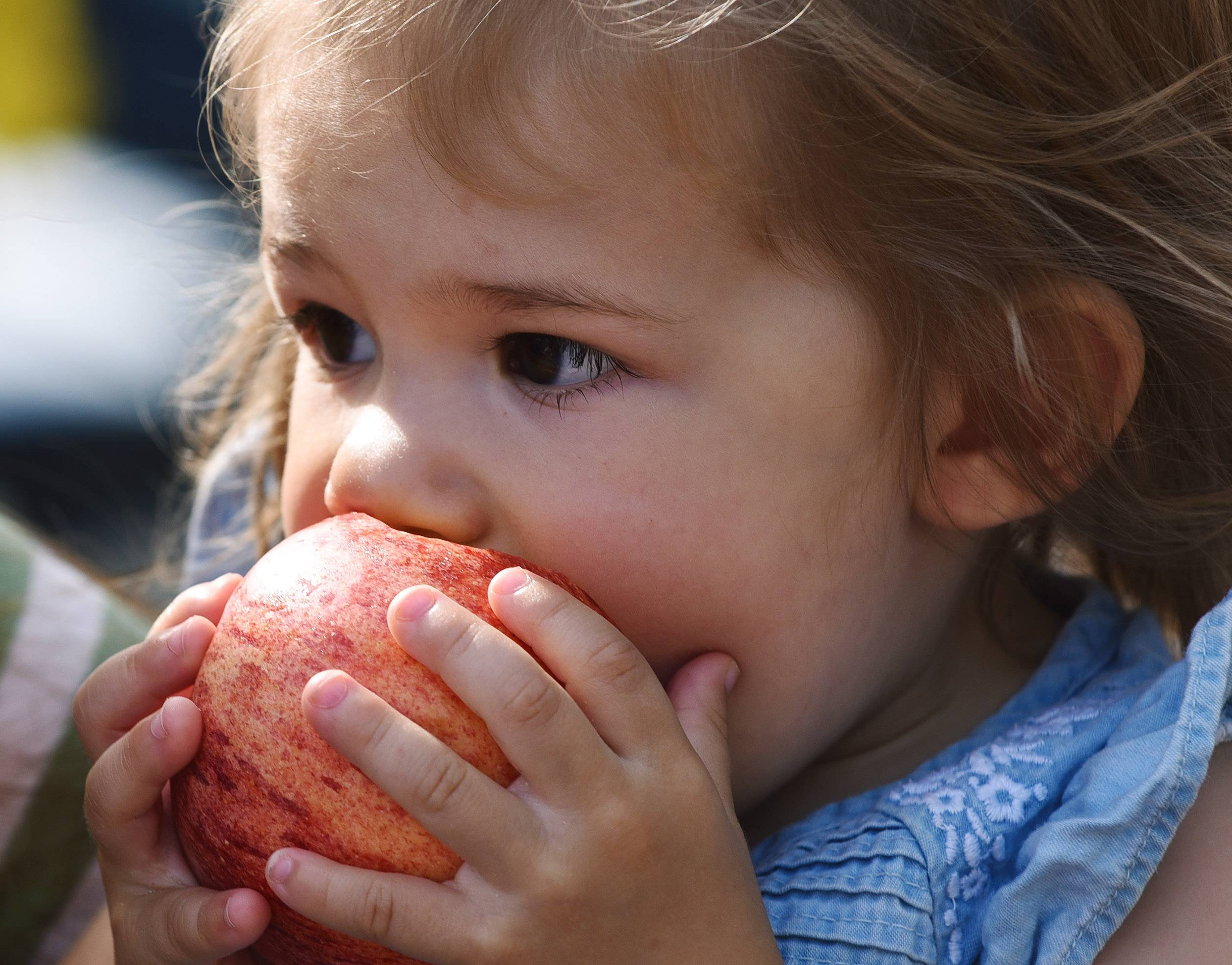 Charlotte Gottlieb, age 20 months, of Palatine, takes a bite of an apple while visiting Apple Fest in Long Grove with her mom, Kristen, Friday.