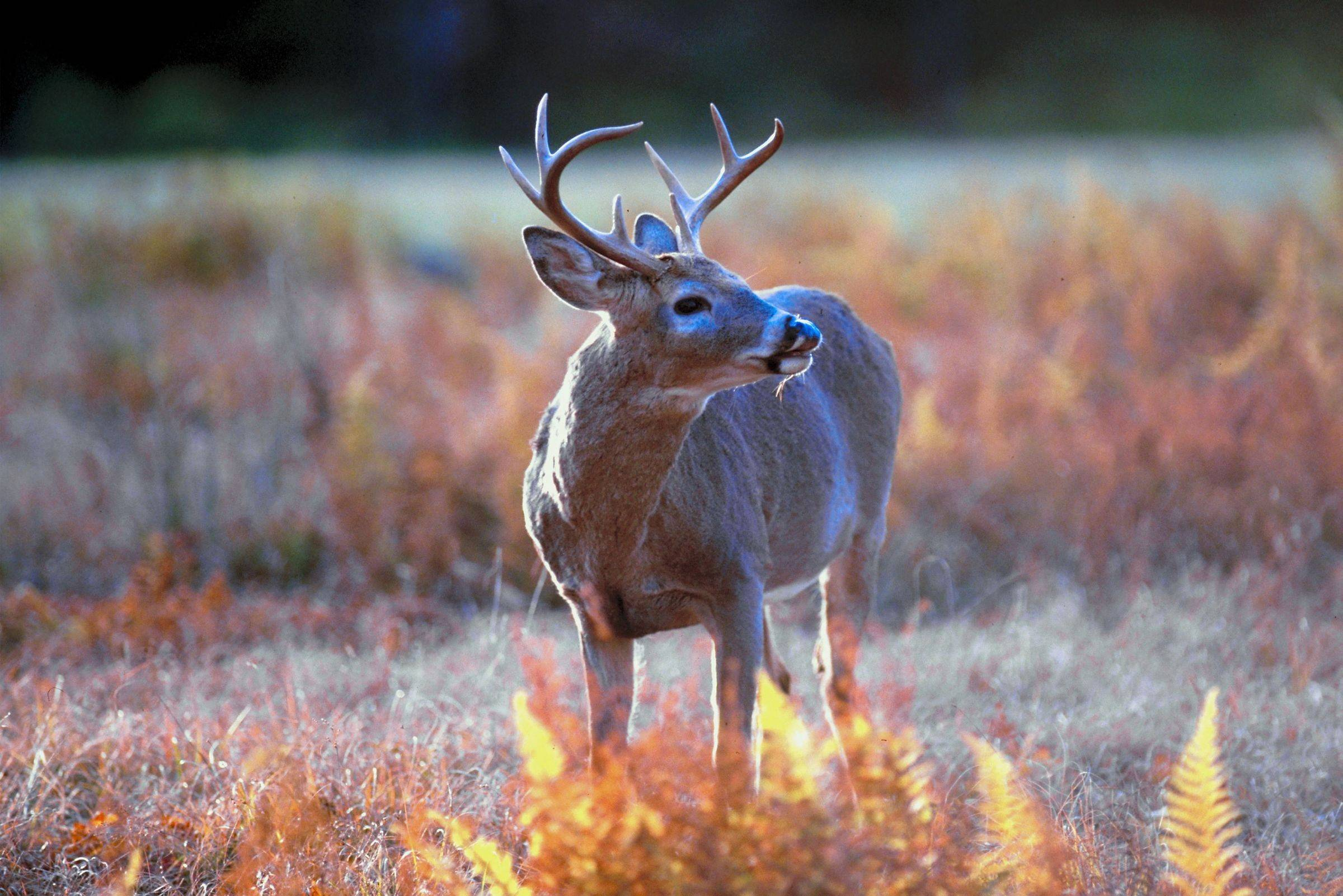 Deer will be hunted for the first time at Adeline Jay Geo-Karis Illinois Beach State Park near Zion. Only bow-and-arrow hunting will be permitted.