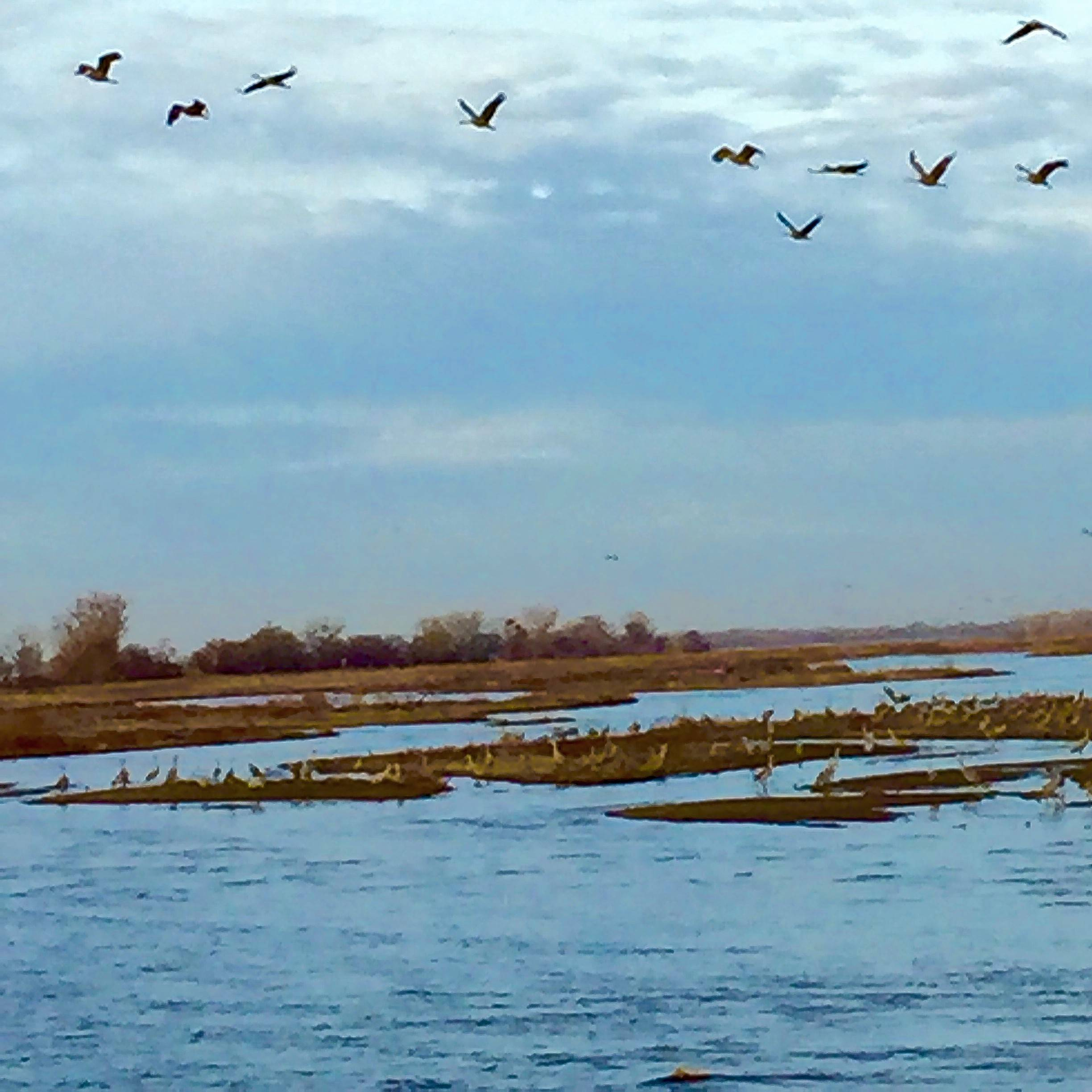 Even casual photographers can capture the Sandhill cranes in migration along Nebraska's Platte River valley.