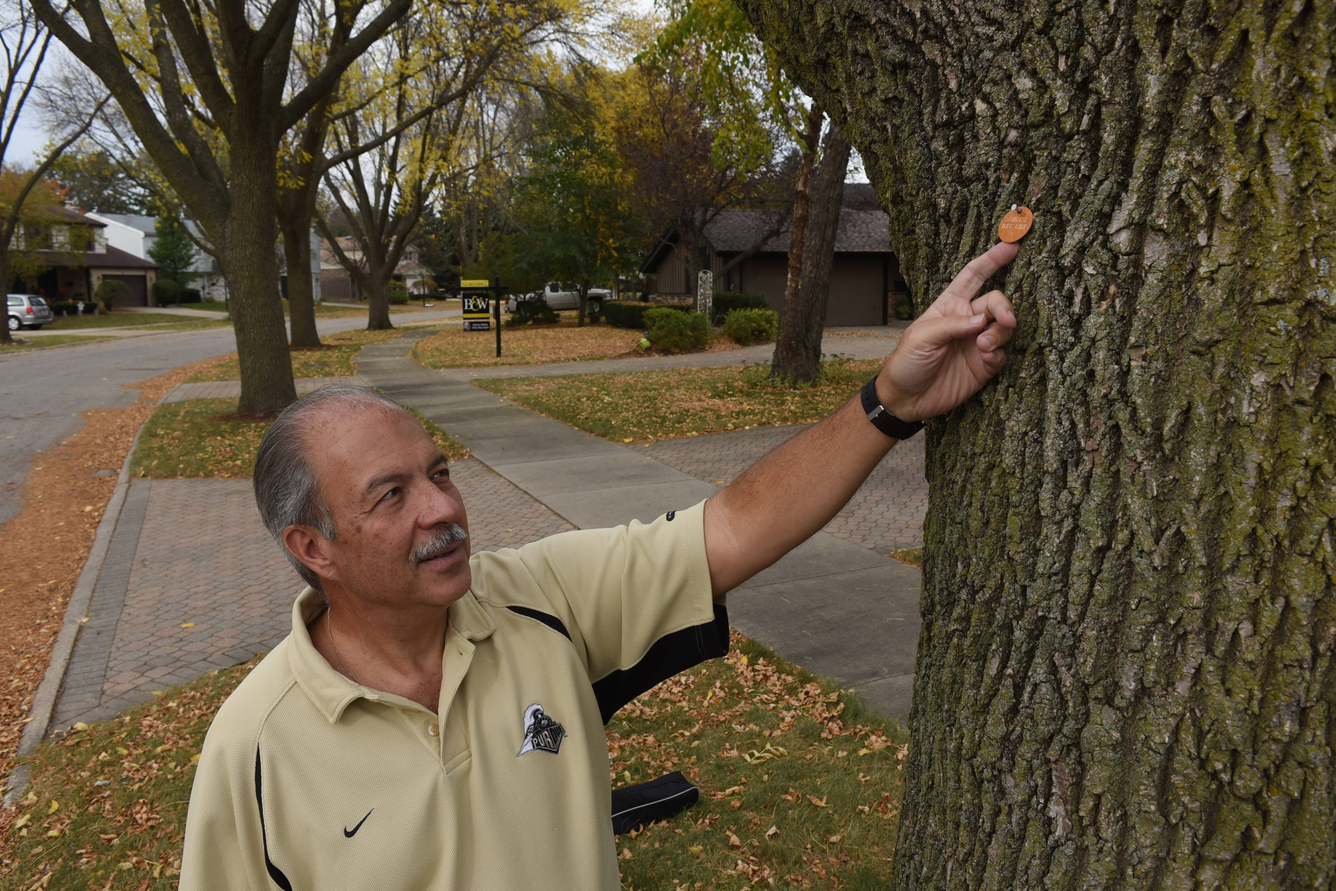 Ed Michalski, pointing to the tag on his parkway tree, says he is frustrated because Arlington Heights will no longer help residents pay to treat ash trees on the parkways.