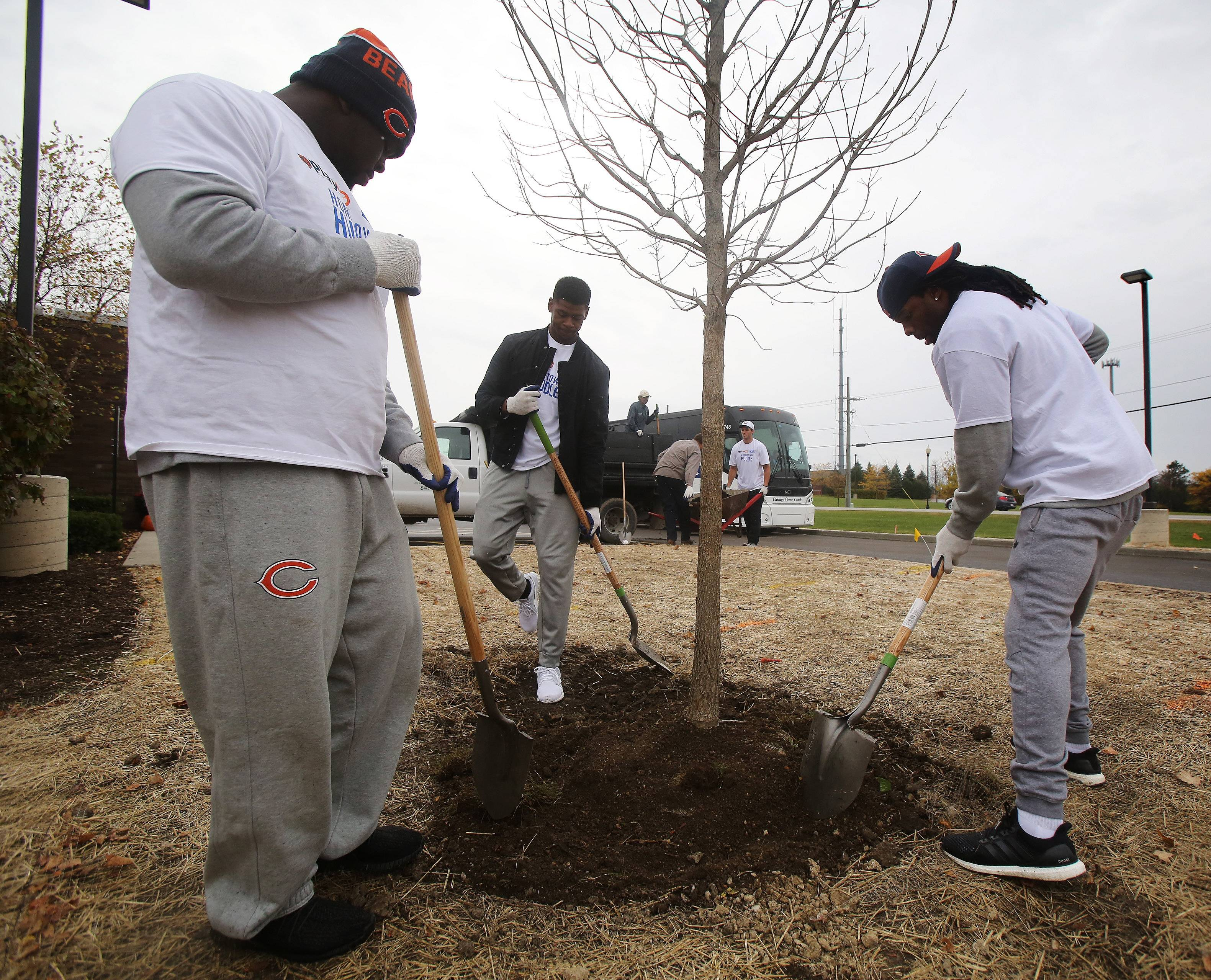 Chicago Bears rookies Eddie Goldman, left, Cameron Meredith and Kevin White plant a tree at the Lake County Children's Advocacy Center in Gurnee on Tuesday. The players worked with staff and landscapers to create Chicago Bears' Play Zones in conjunction with United Way Hometown Huddle.