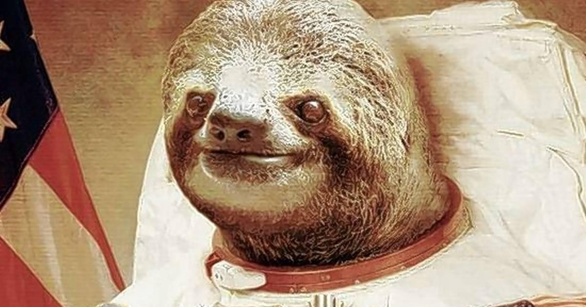 Sloth in a tuxedo