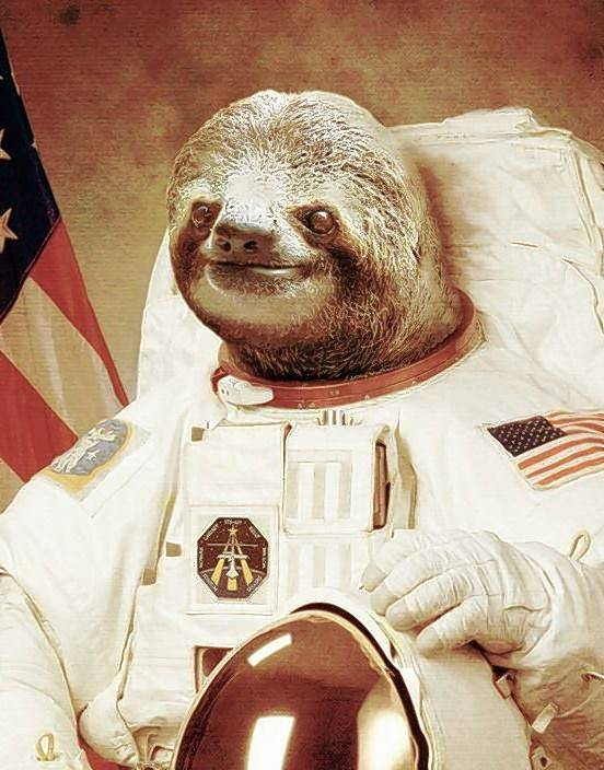 astronaut sloth conquered the internet  now he u0026 39 s going to