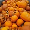 Where you can recycle old pumpkins in suburbs Saturday