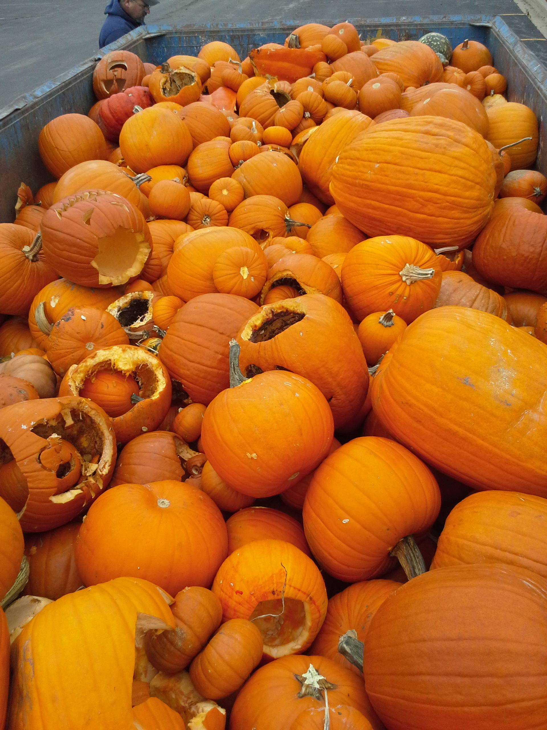 In 2014, SCARCE organized the first pumpkin recycling collections in DuPage County.