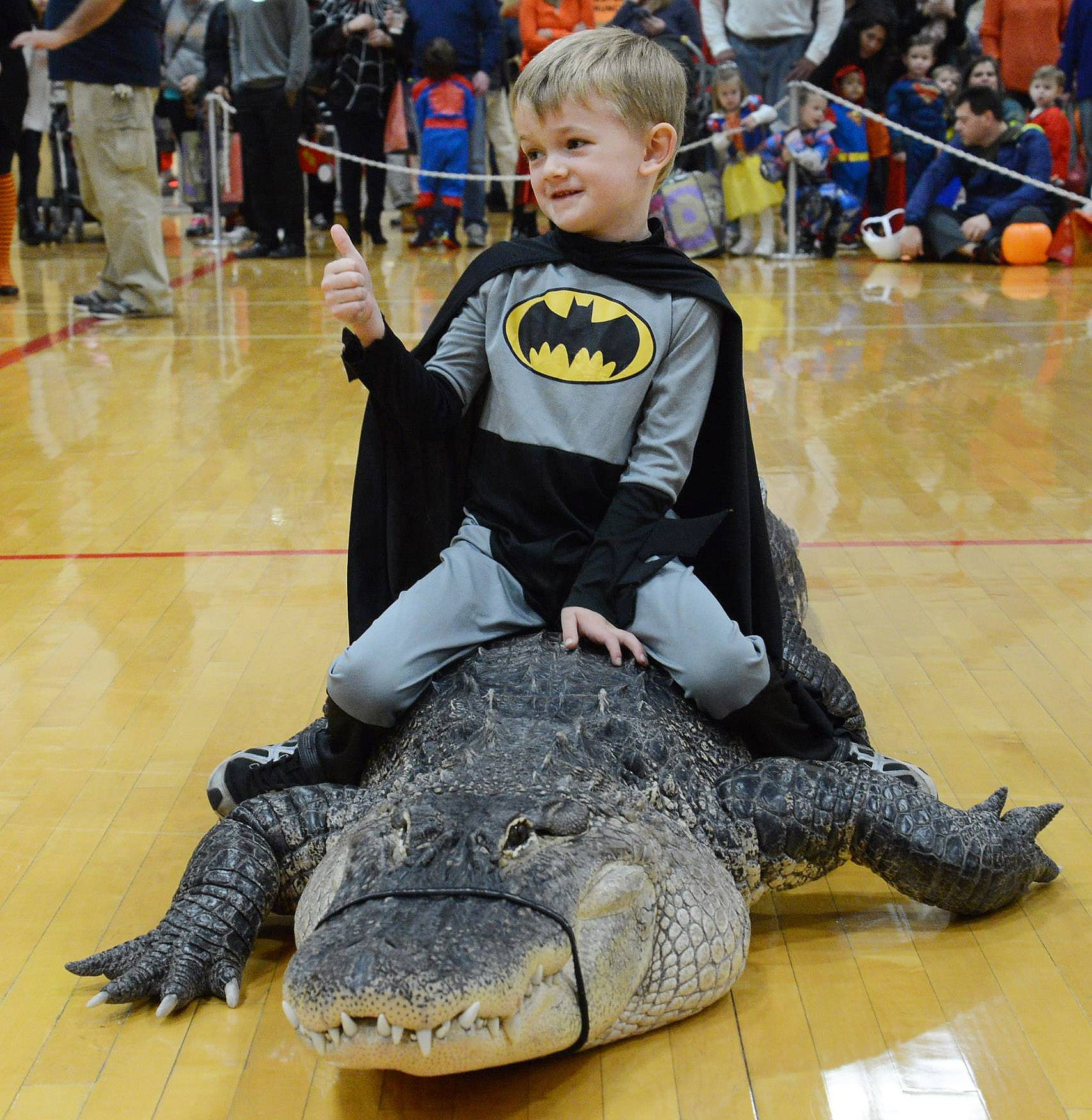 Five-year-old Tristen Suehr, of Palatine gives a thumbs up while riding an alligator, courtesy of Jim Nesci and his Cold Blooded Creatures during a Halloween Party at the Palatine Community Center.