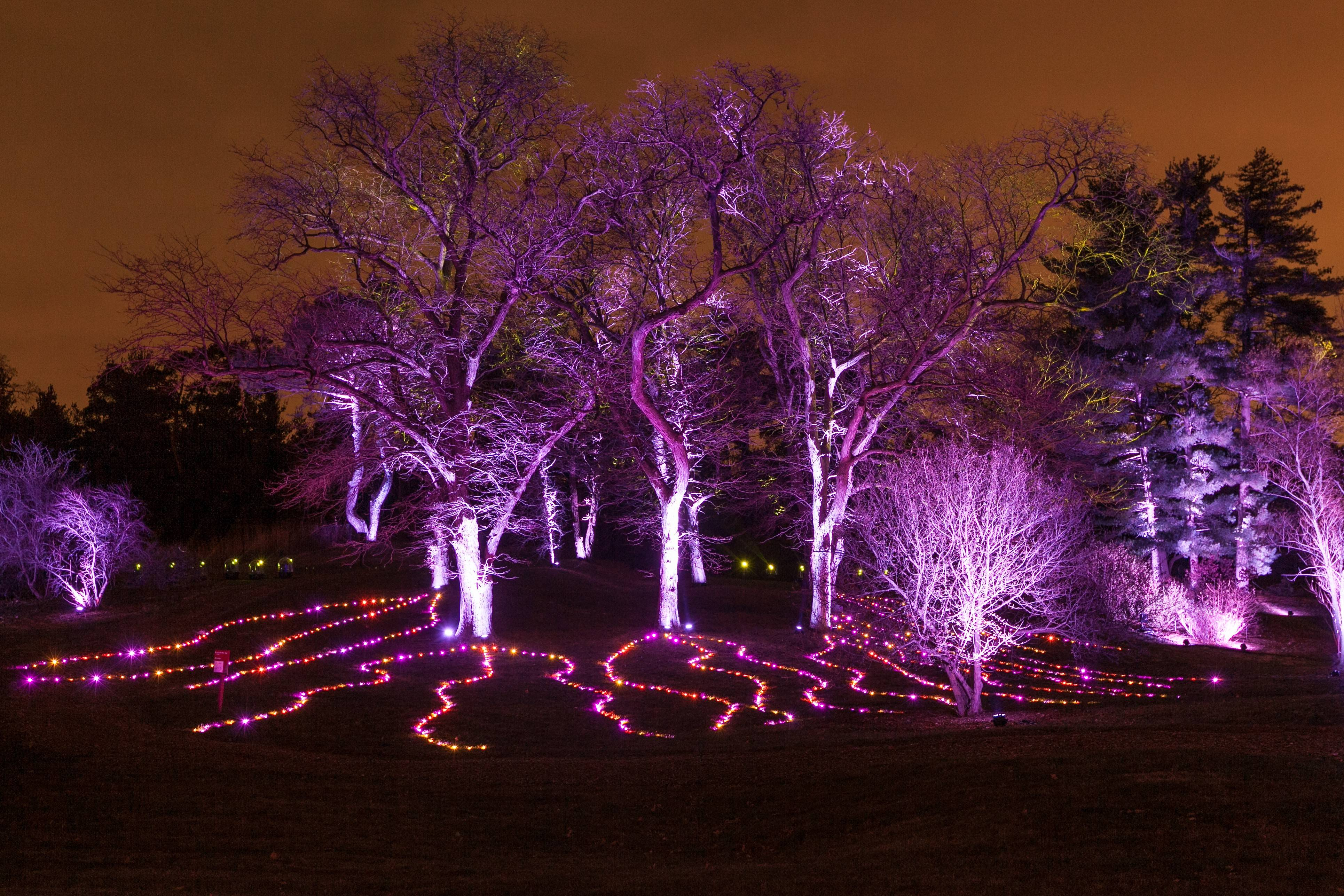 Mother Nature provides a dramatic background for interactive holiday lighting at Morton Arboretum's Illumination: Tree Lights.