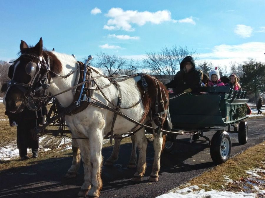 Families enjoy horse-drawn wagon rides in Community Park during WinterFEST in Addison.Braulio Herrera