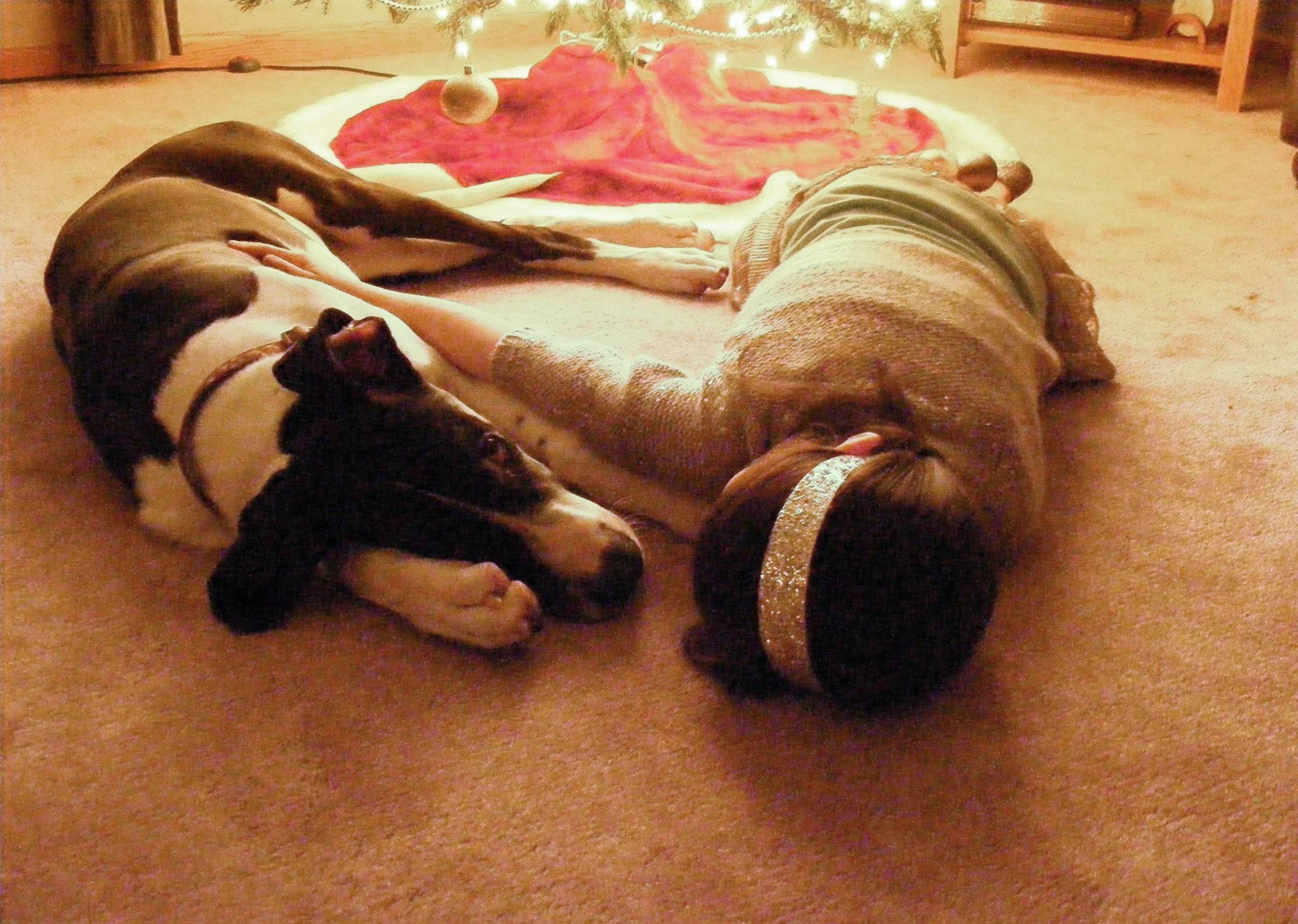 Stella, a Great Dane, and Amanda rest after taking pictures for a Christmas card as they lay in front of the tree in Hoffman Estates two years ago.