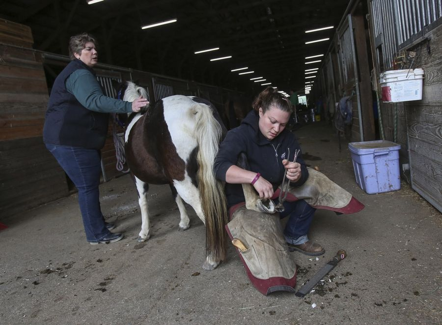 Renee Enright holds her miniature horse, Smoochie, as farrier Jamie Westland Wandell trims the nails.