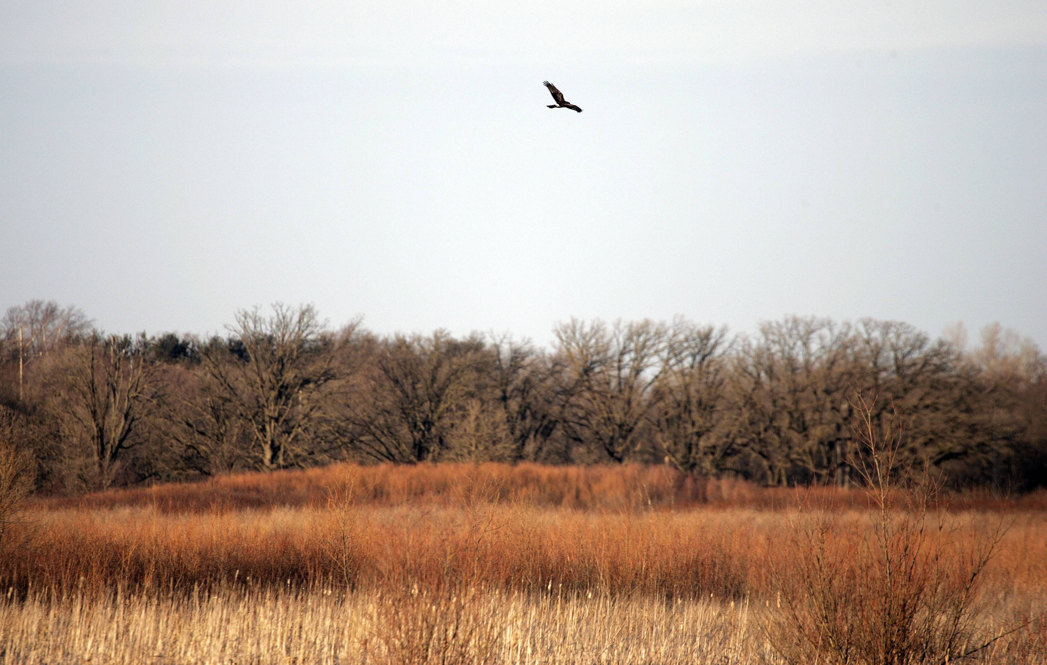The Hackmatack National Wildlife Refuge in northern McHenry County is one of the topics available through the Environmental Speakers' Bureau, offered by the Environmental Defenders of McHenry County.