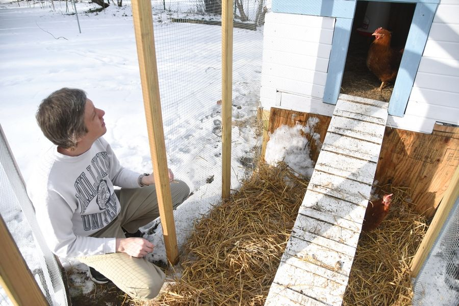 Todd Martin of Elgin is among residents who have permits for backyard chickens. The city is making the program permanent for up to 25 single-family homes.