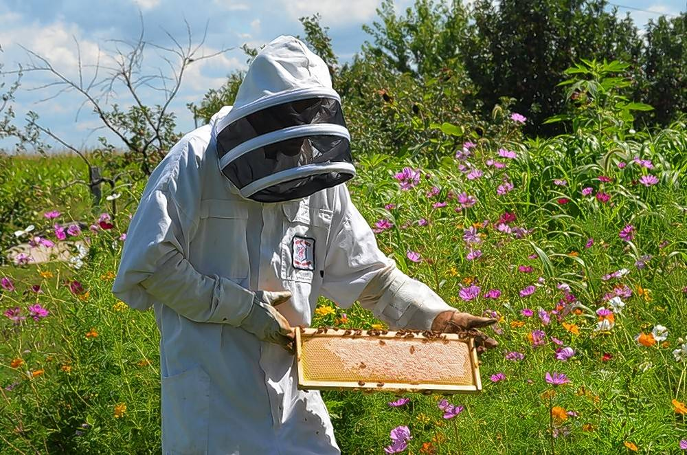 Find out about backyard beekeeping and everything you need to know to get started during an interactive and hands-on class March 12 and 19 with Heritage Prairie Farms in Elburn.