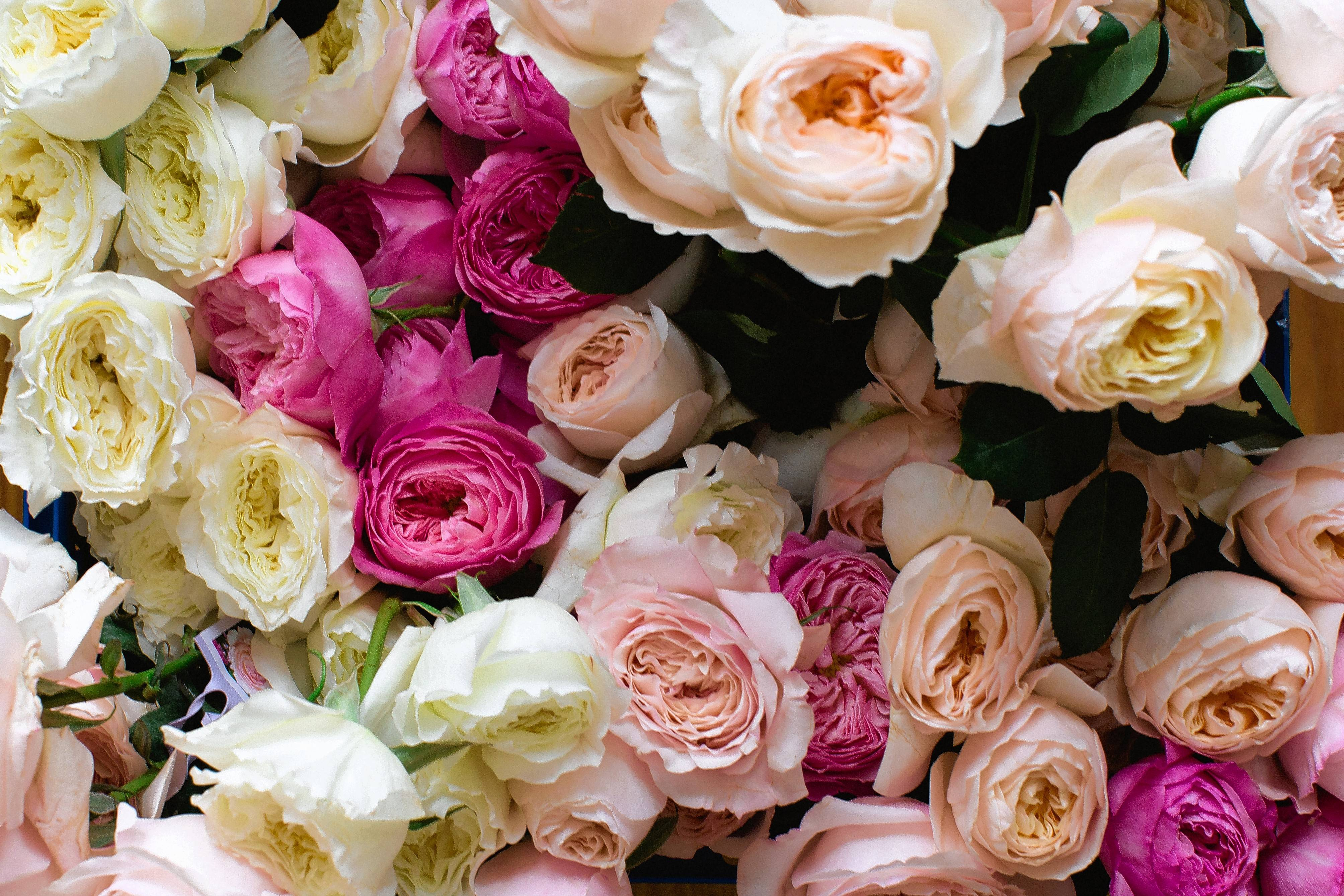 Florists are using high-end garden roses in place of traditional long-stemmed hybrid teas for Valentine's and beyond.