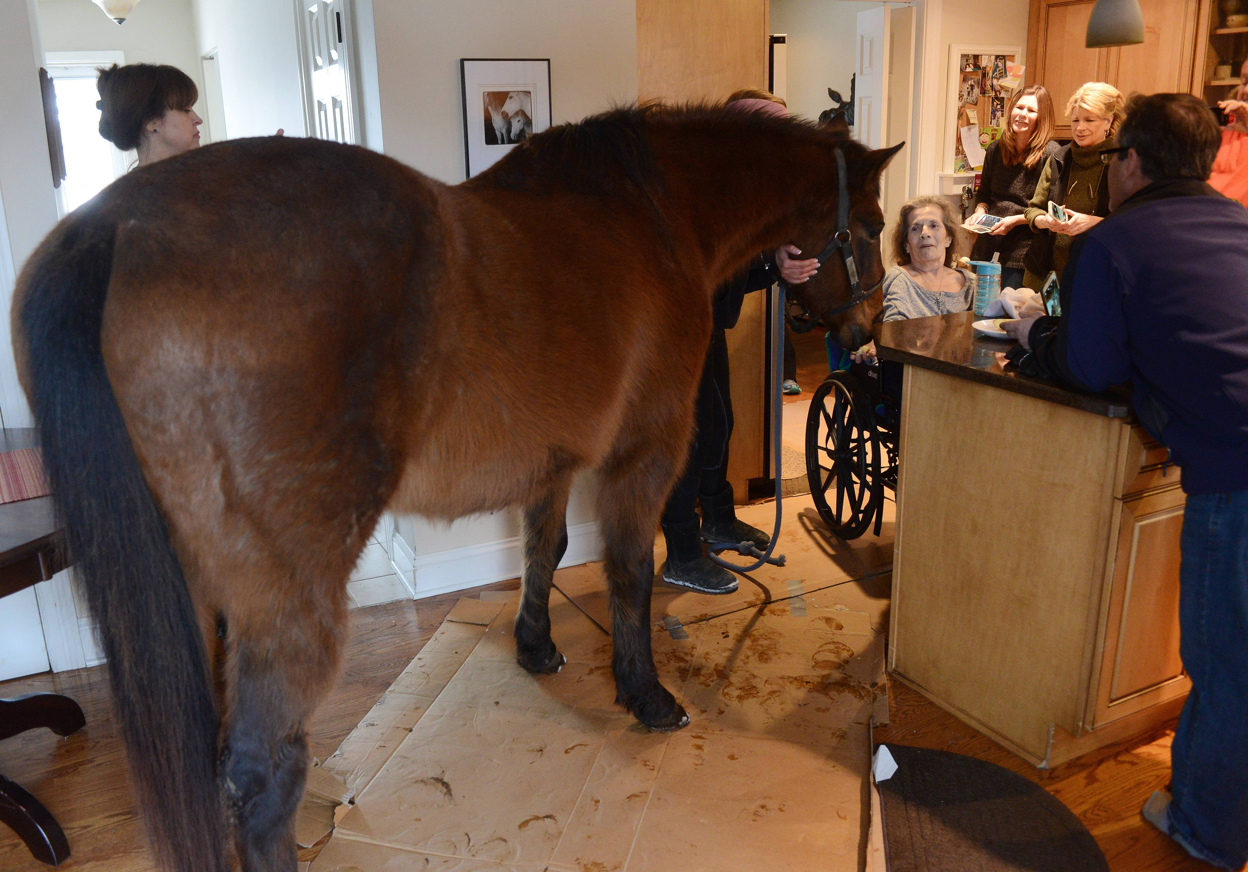 Carole Knanishu, of Arlington Heights, who has multiple sclerosis, is treated with a visit by two horses inside her home Tuesday. She is a horse enthusiast who owned a horse many years ago.