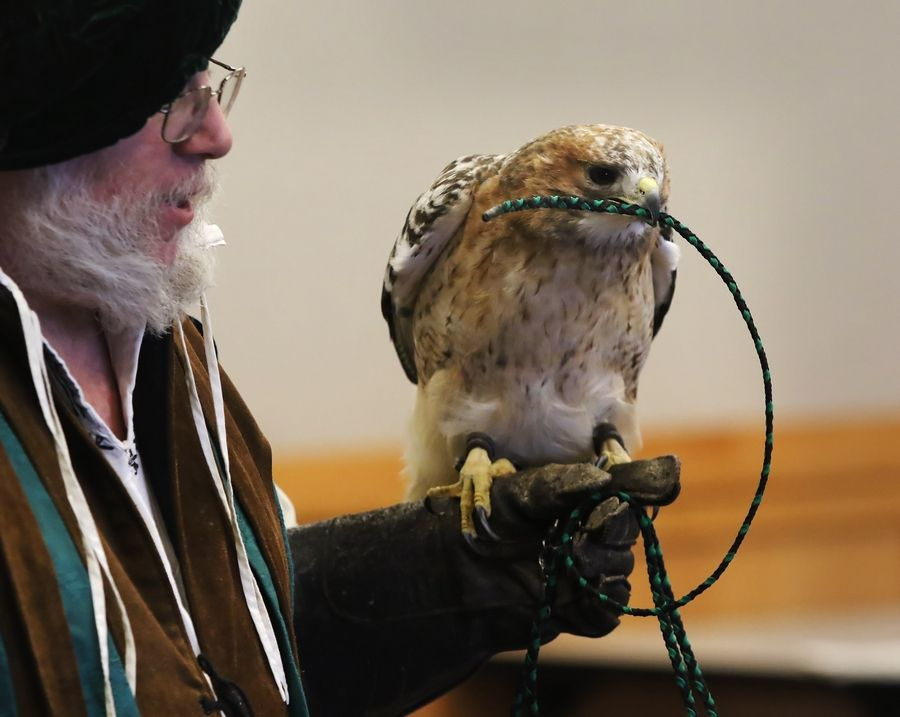"A red-tailed hawk holds its rope as ""Royal Falconer"" Mark Booth showcases his birds of prey Monday at the Ela Area Public Library in Lake Zurich. Booth exhibited a red-tailed hawk, a kestrel falcon and a peregrine falcon."