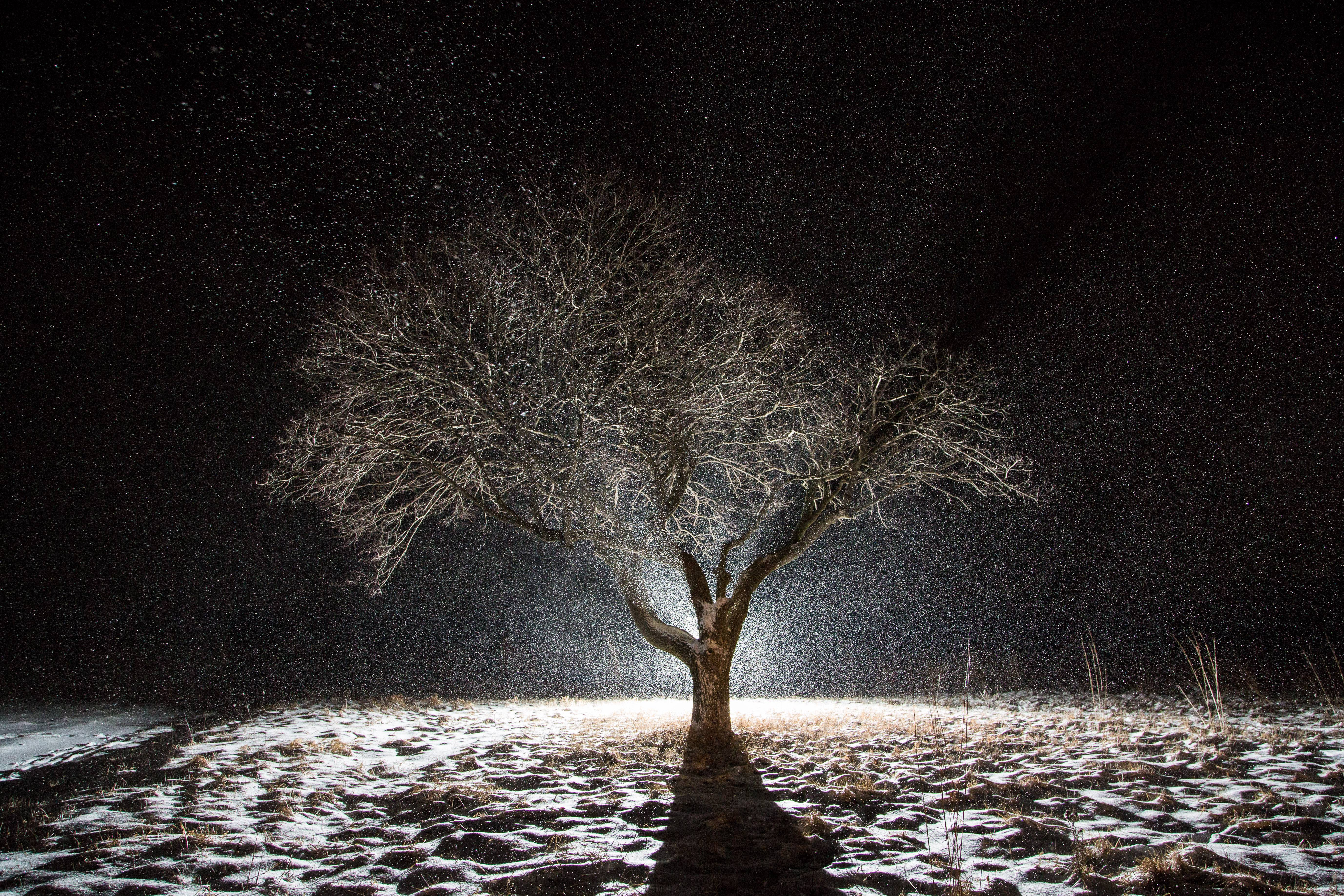 I took this picture of my favorite tree during this year's Valentine's Day snowstorm. I'd been thinking about taking this picture for weeks, just waiting for the right combination of weather and darkness. It all came together last Sunday night.