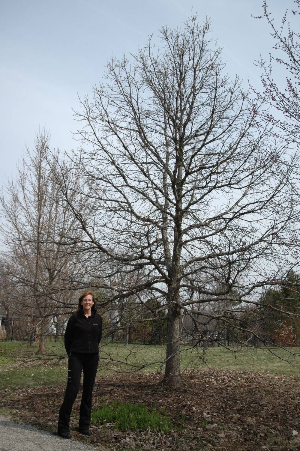 New Grayslake laws address oak trees, fertilizer