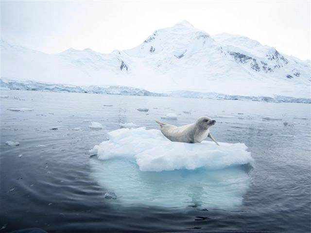 A crabeater seal rests on a beautiful iceberg near Port Lockroy, Antarctica on January 12.