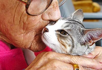 Eleanor, a former client of of Chicago-based Touched By An Animal, gives her cat some affection when they were reunited.