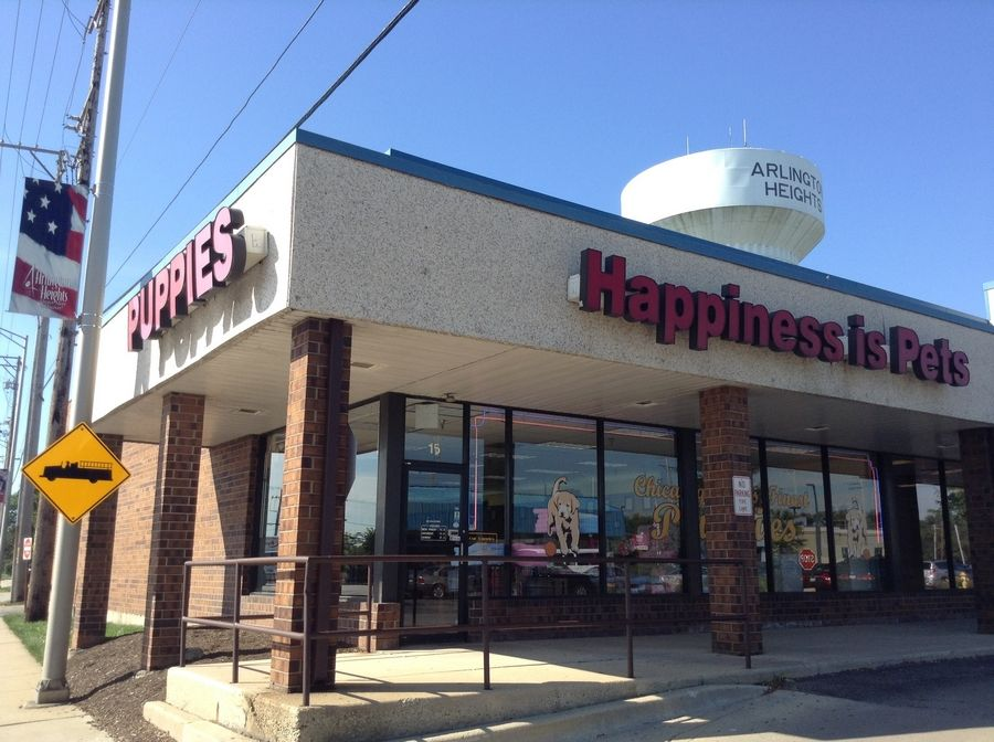 Arlington Heights village trustees on Monday approved new set of regulations that will require pet stores like Happiness Is Pets at 15 W. Golf Road to disclose information about the breeders and history of the dogs and cats they sell.