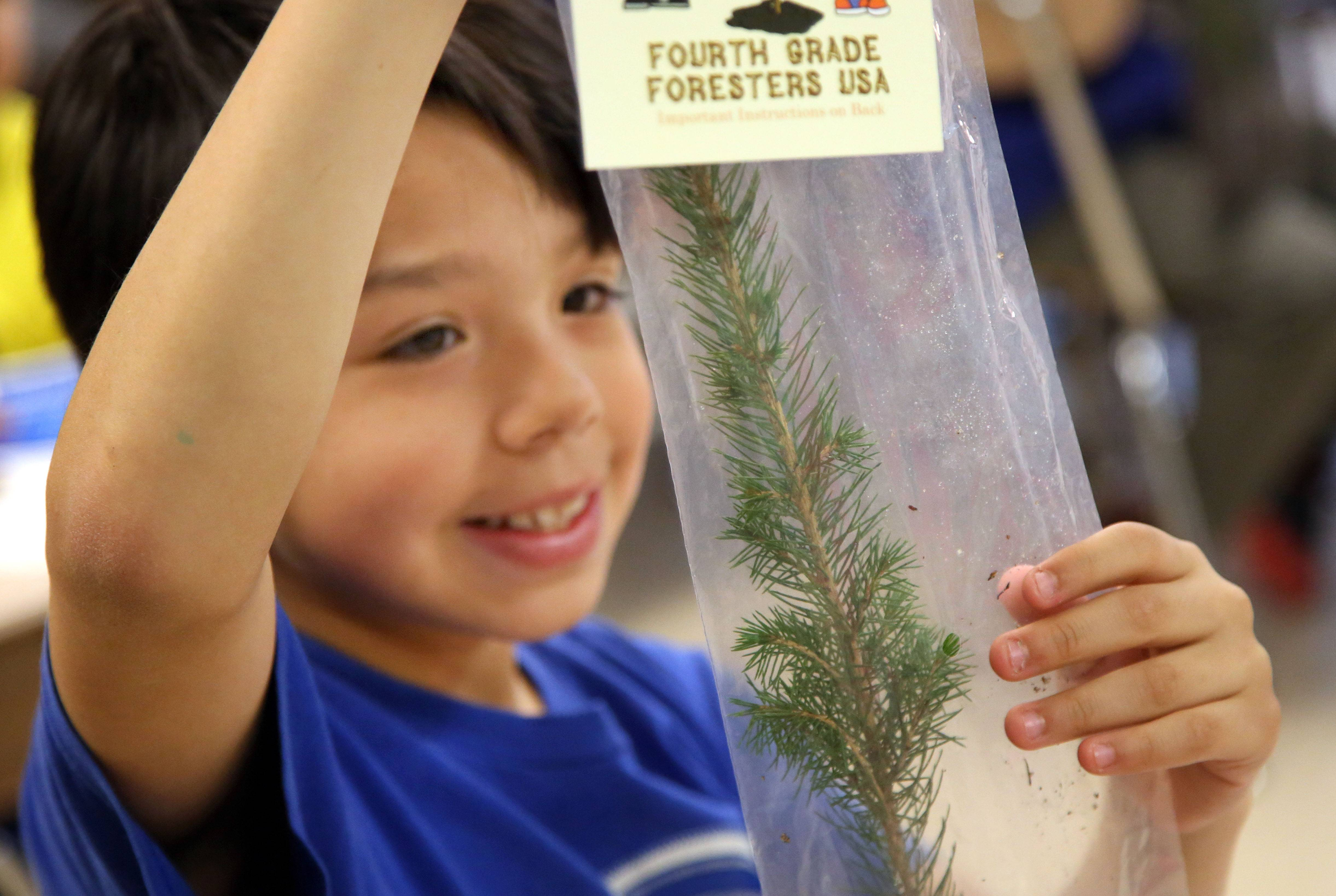 Dominic Valencia looks at his Norway spruce sapling as fourth graders at Woodland Intermediate School in Gurnee received trees to plant at their home Thursday for Arbor Day.