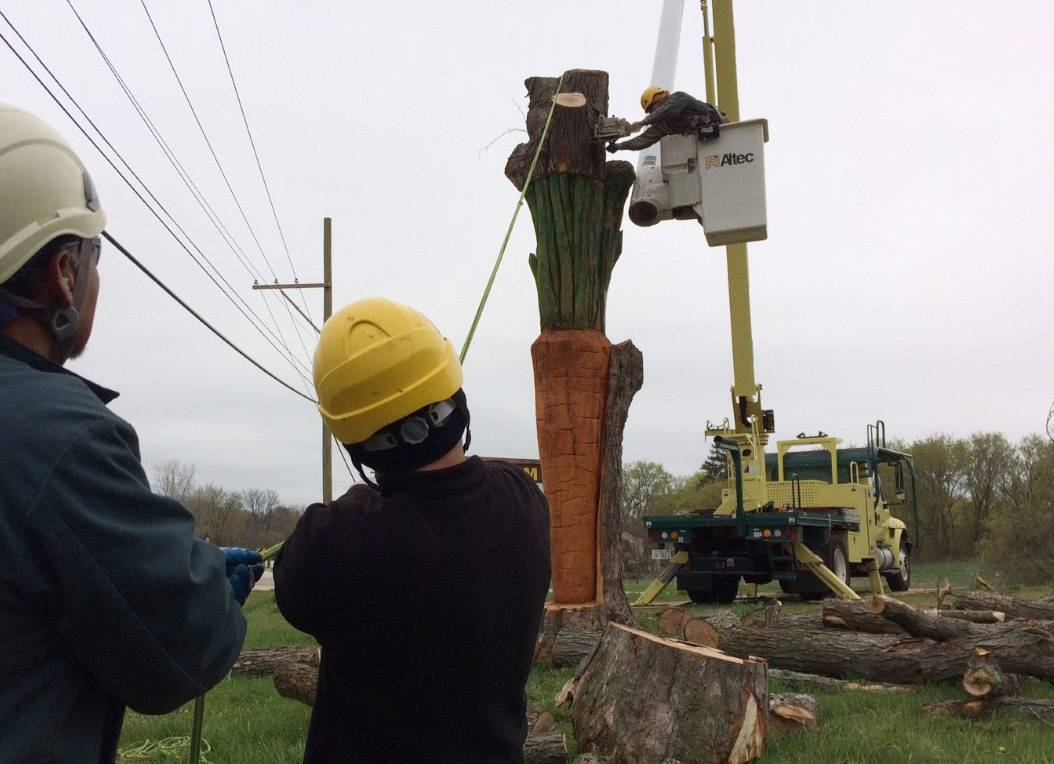 A crew from Bartlett Tree Experts removes the top of a dead maple tree Thursday at the entrance to the Radical Root organic farm on Milwaukee Avenue near Libertyville, leaving a carved carrot as a landmark. Watch a time-lapse video at dailyherald.com/more.