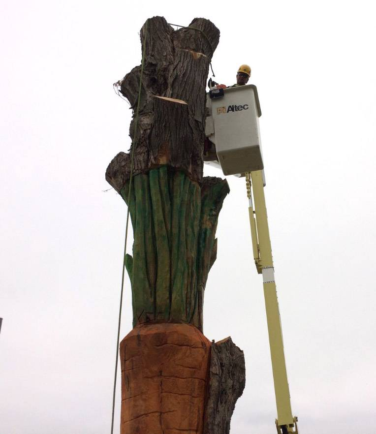 Bartlett Tree Experts crew member Juan Tamayo makes the final cuts Thursday to remove the top of a dead maple tree, leaving a carved carrot as a landmark.