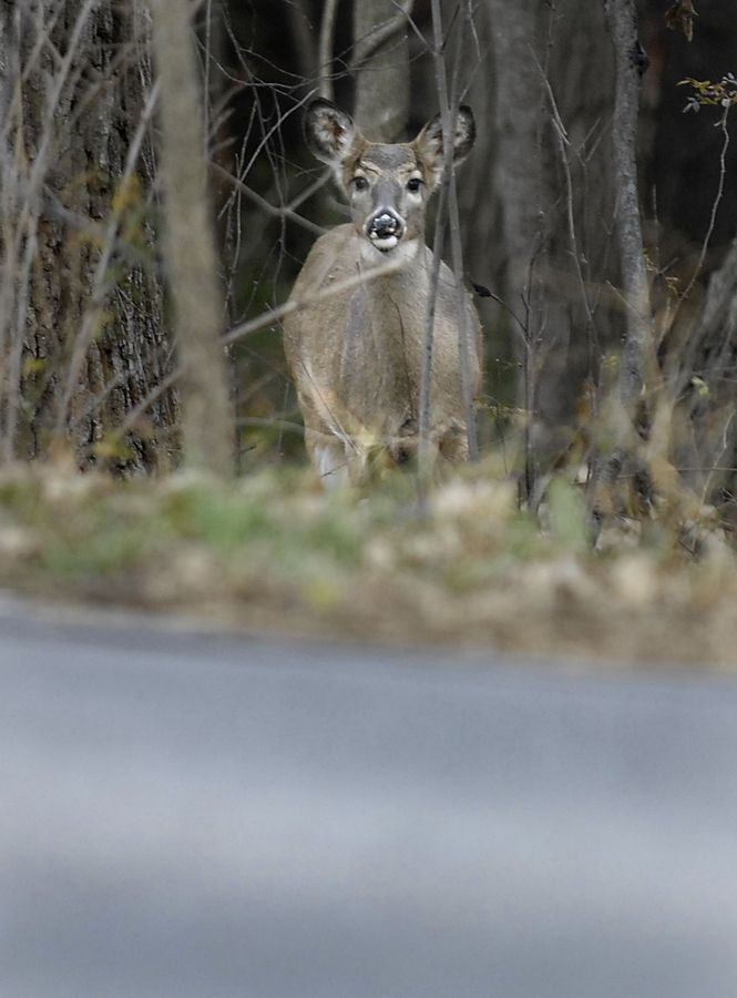 Kane County Forest Preserve District commissioners are considering expanding deer hunting with bows in local preserves. Bow hunting is allowed in three preserves.